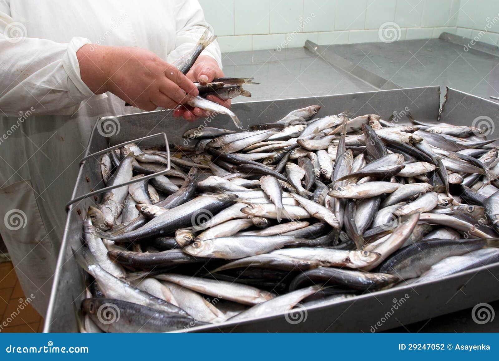 Download Baitfish Do Arenque Pequeno Foto de Stock - Imagem de grupo, mercado: 29247052