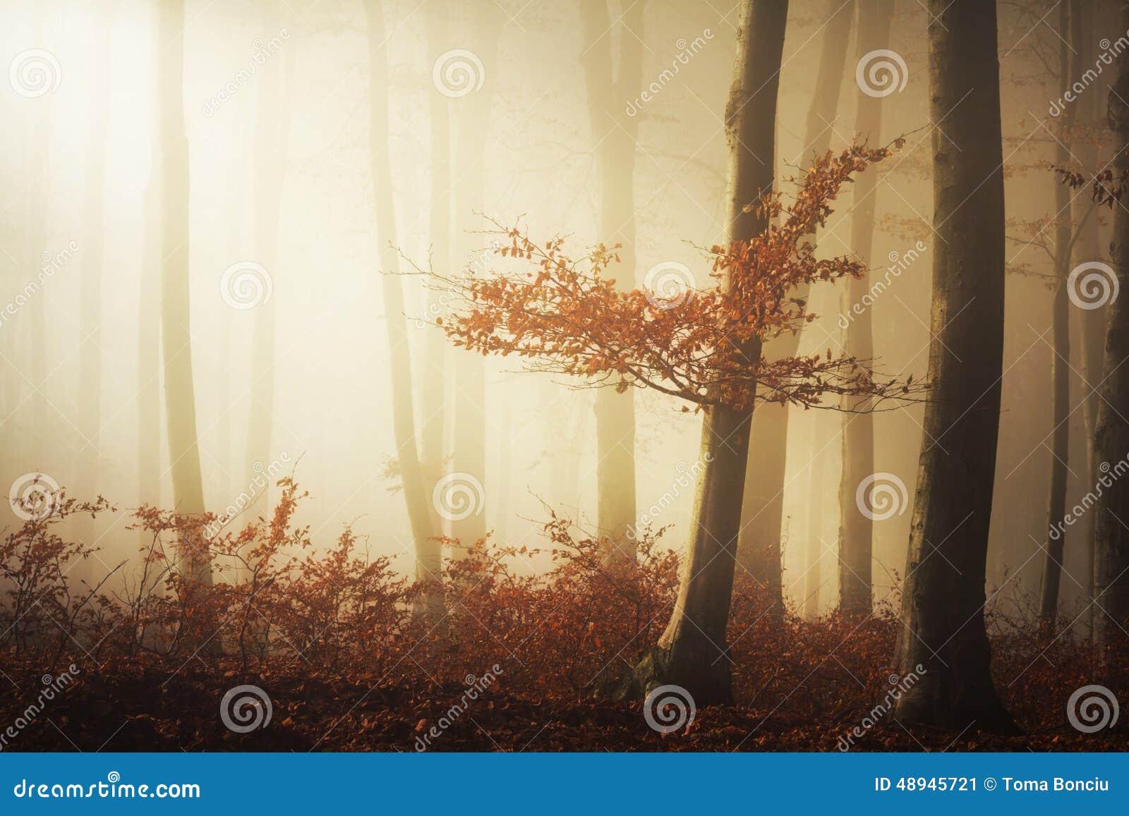 Bajka mgłowy las