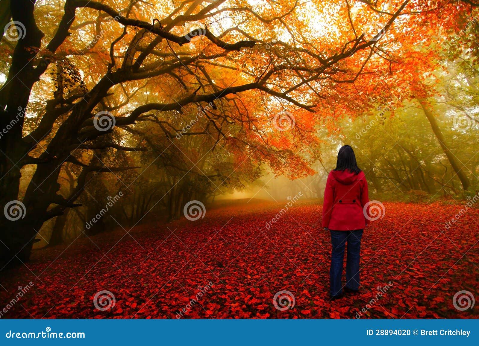 Bajki lasowa czerwona ścieżka