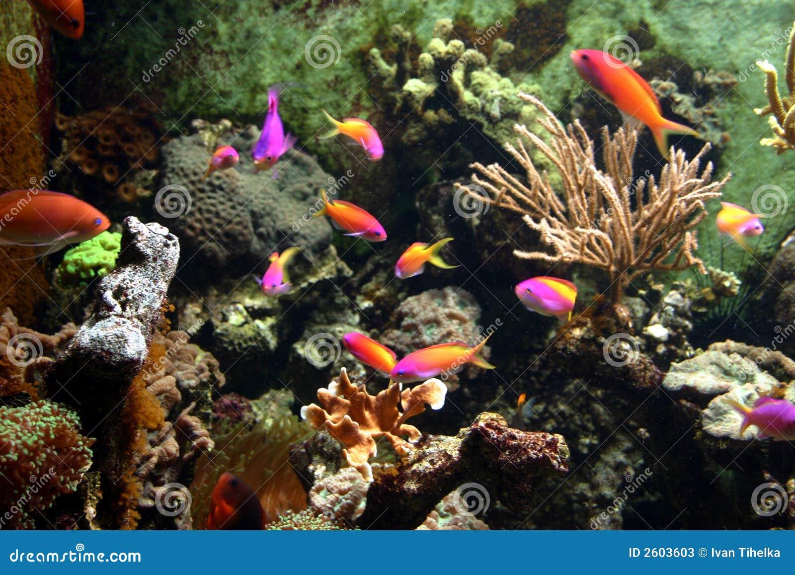 Bajo la superficie del mar