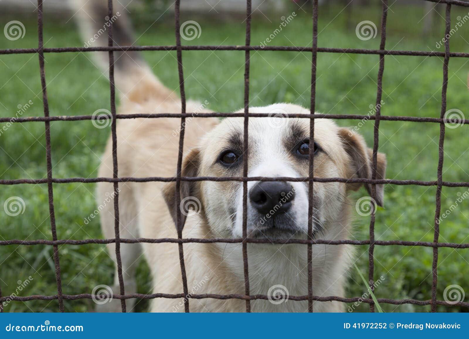 Staket hundstaket : Hundstaket foton - Registrera dig gratis