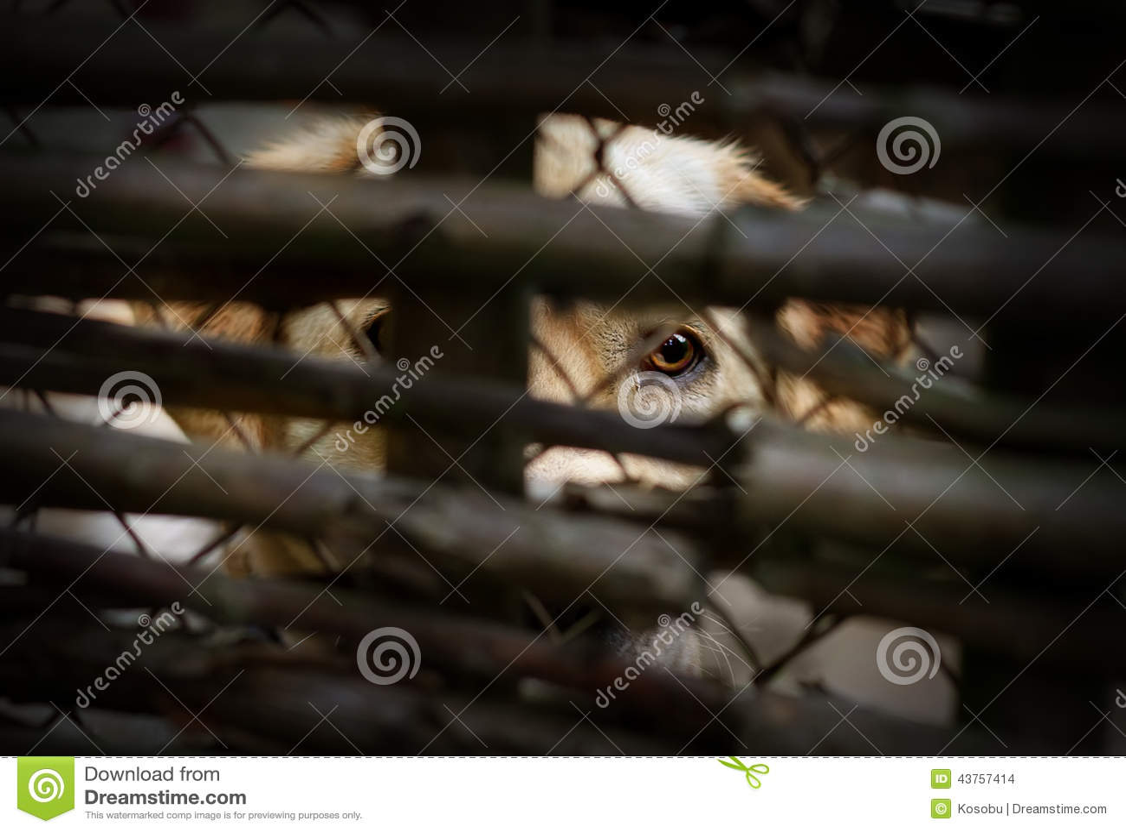 Staket hundstaket : Bak hundstaket arkivfoto. Bild av hutch, medlidande, ensamt - 43757414