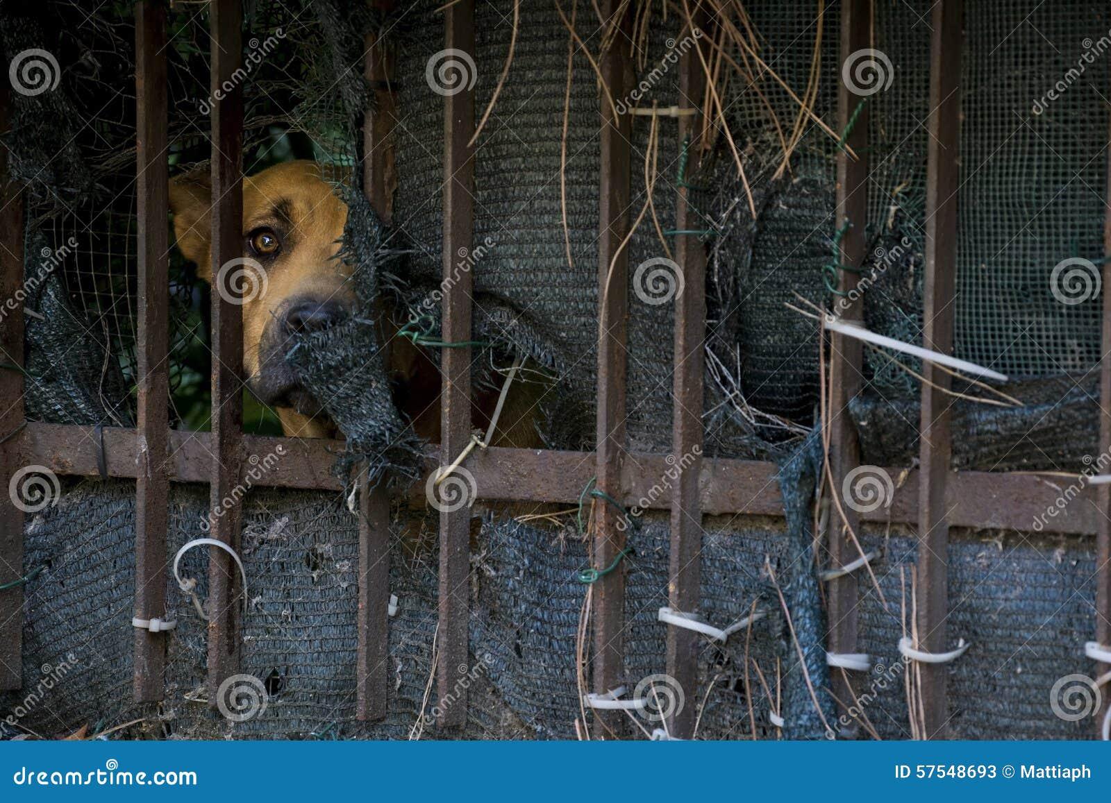 Bak Hundstaket Arkivfoto - Bild: 57548693
