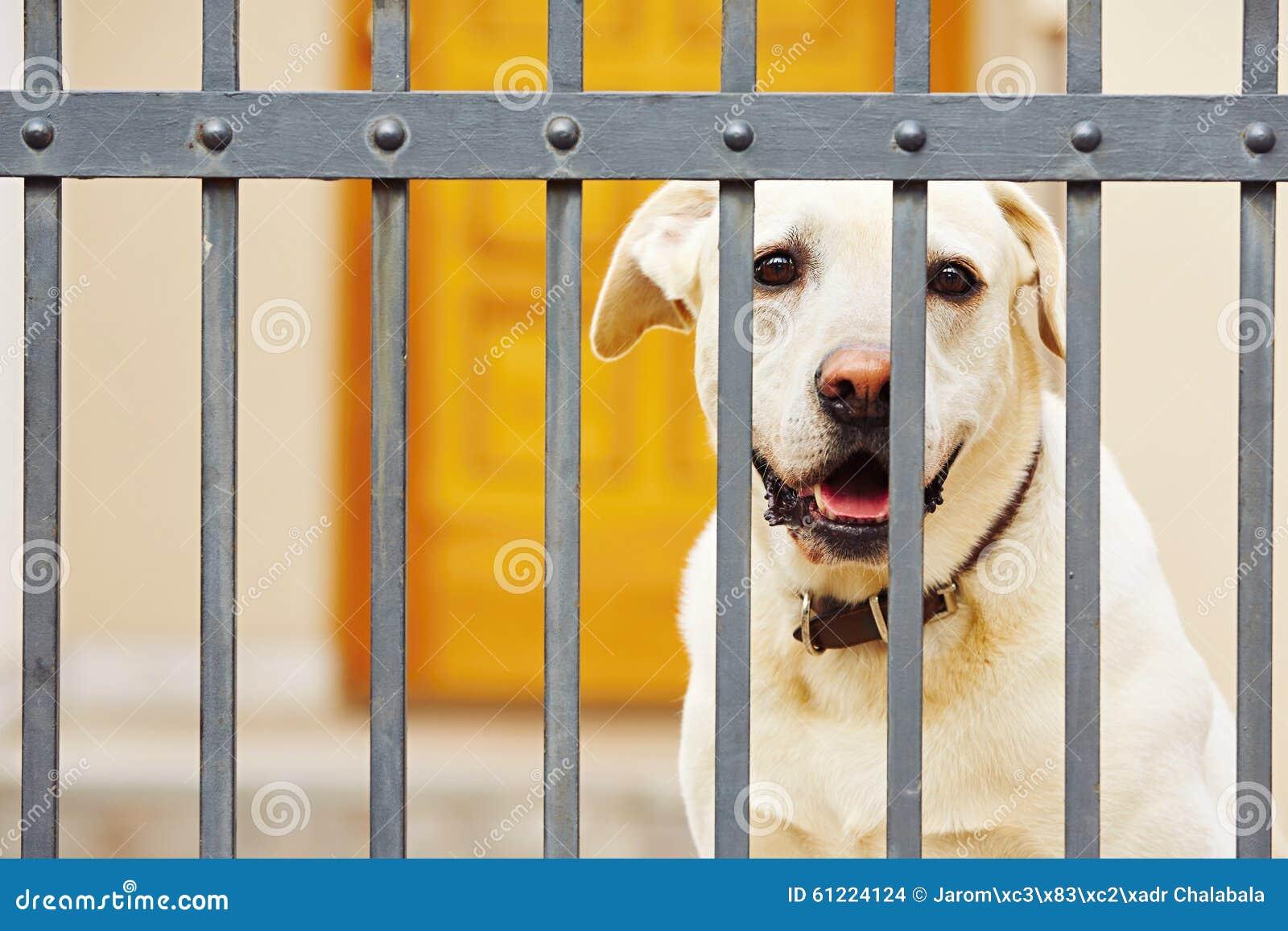 Staket hundstaket : Bak hundstaket arkivfoto. Bild av gulligt, patiens, kuriositet ...