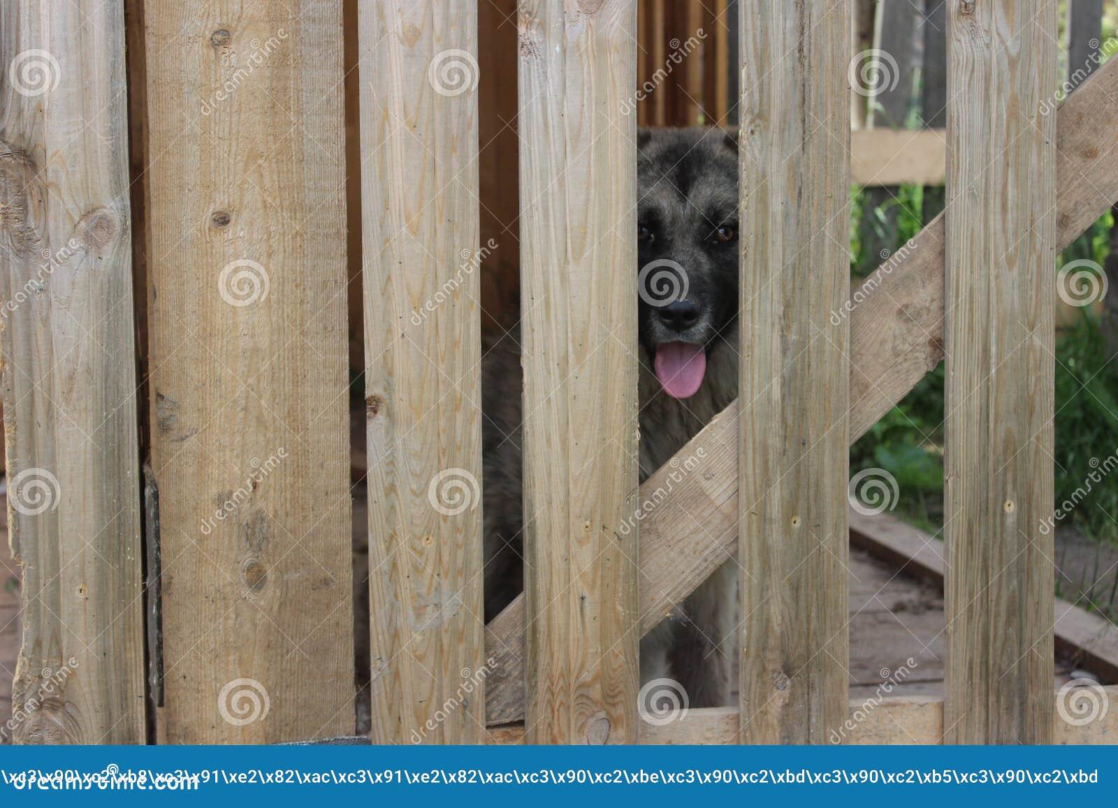 Staket hundstaket : Bak Hundstaket Arkivfoto - Bild: 78737787