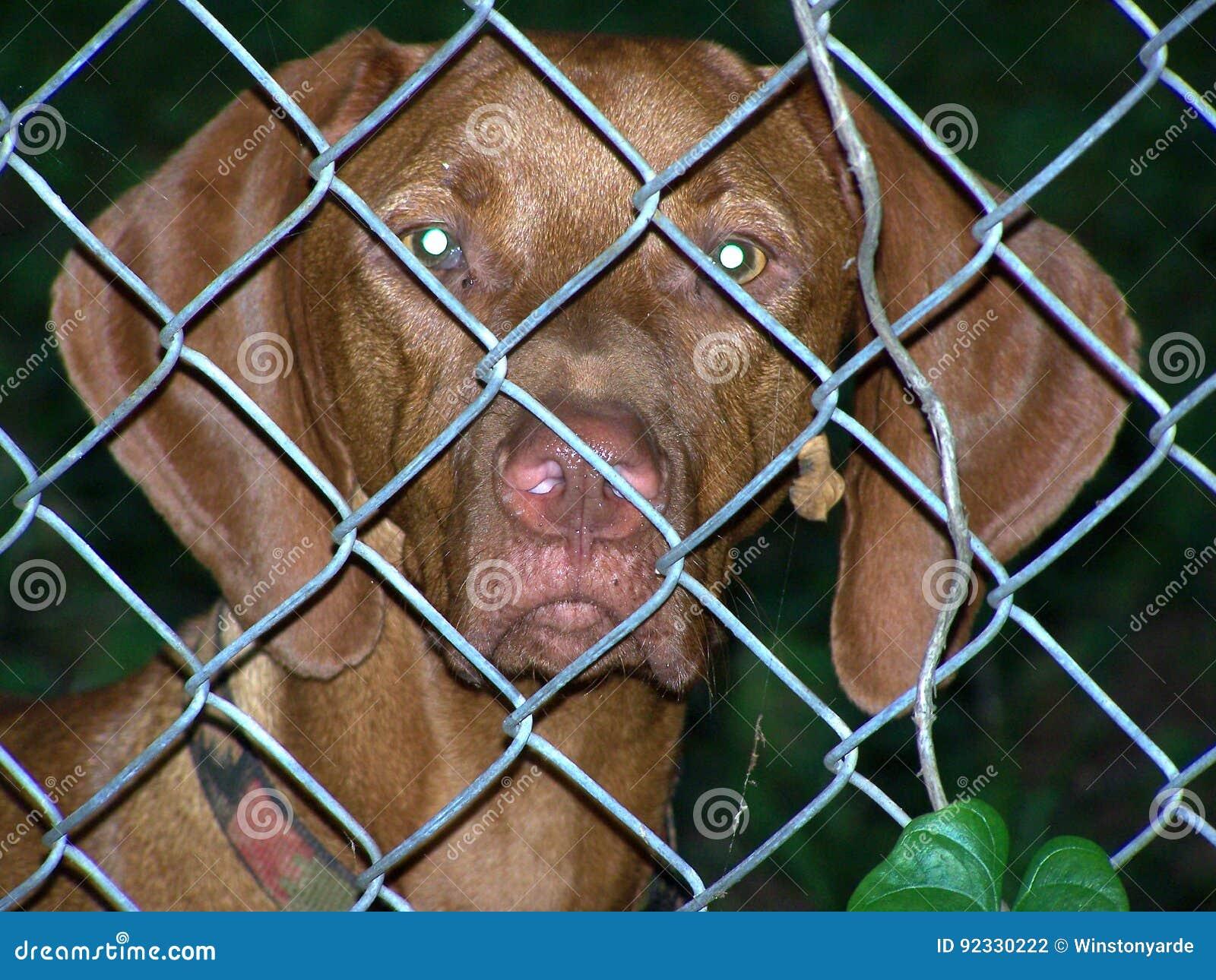 Staket hundstaket : Bak Hundstaket Arkivfoto - Bild: 92330222