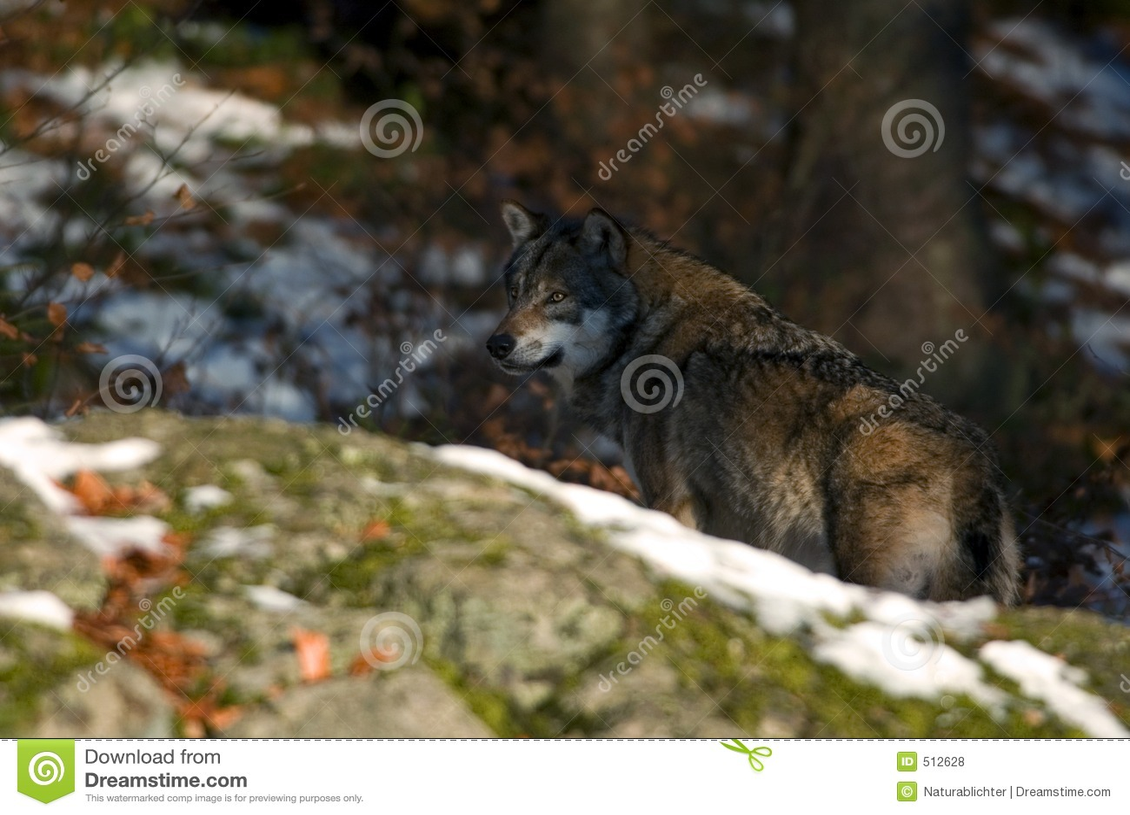 Bak rockwolf