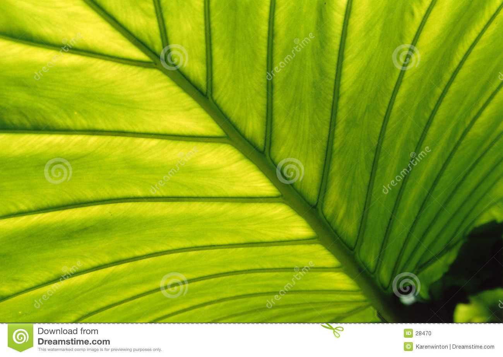 Bakbelyst leaf