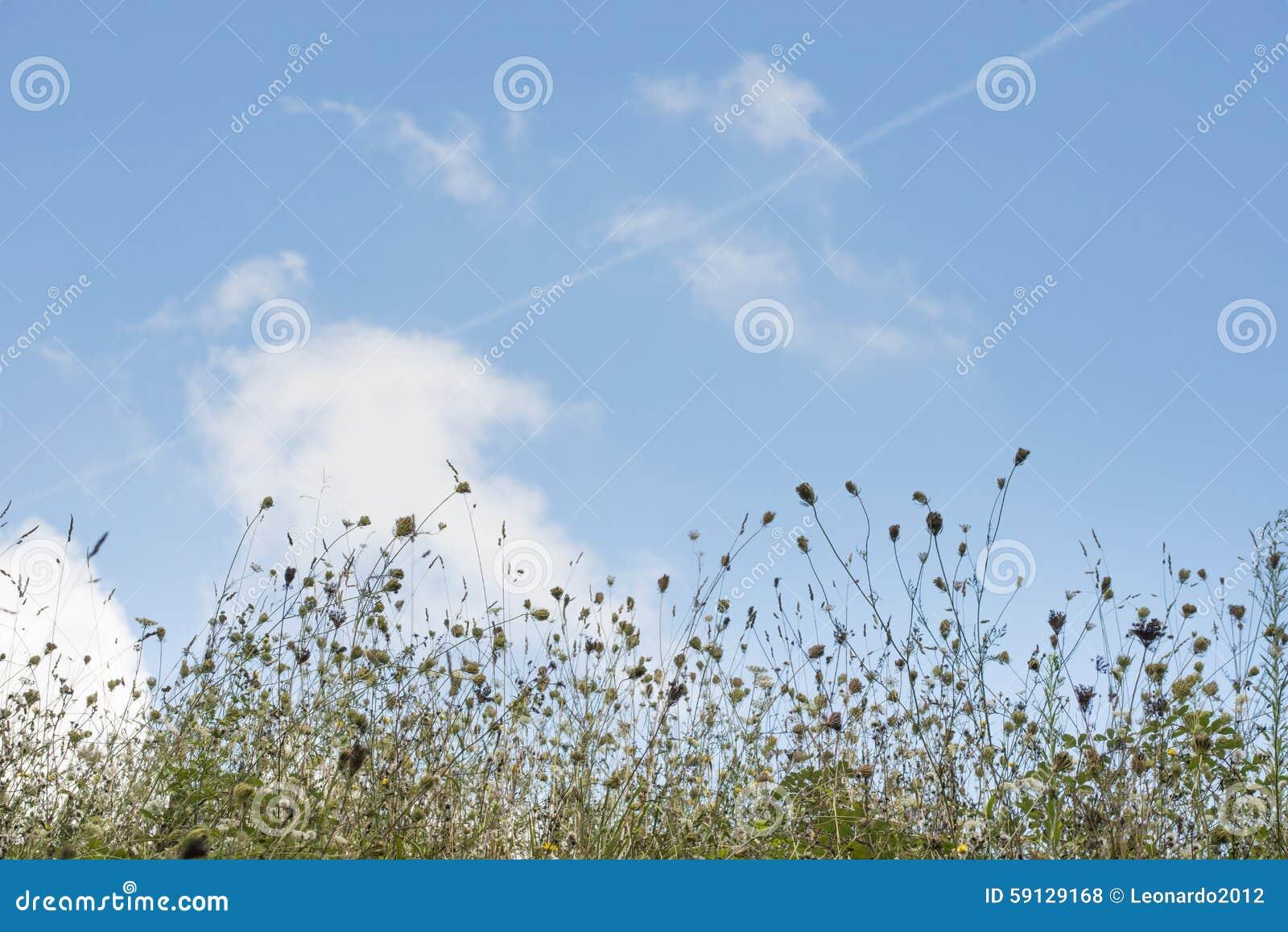 Bakgrund av det blandade blommafältet med himmel och moln