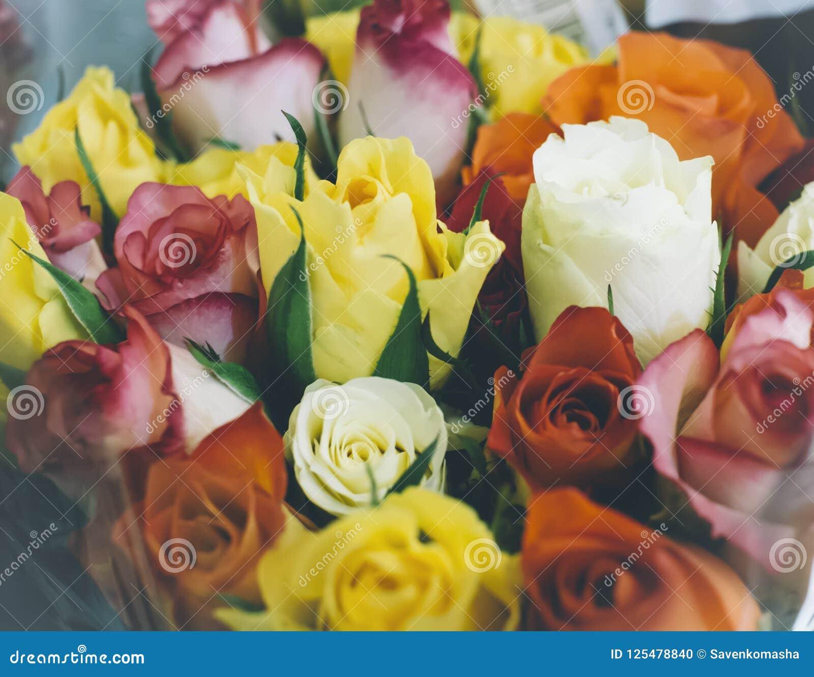 Bakgrund av sikten för orange closeup för rosor den bästa, bakgrundsmodell, blommabegrepp