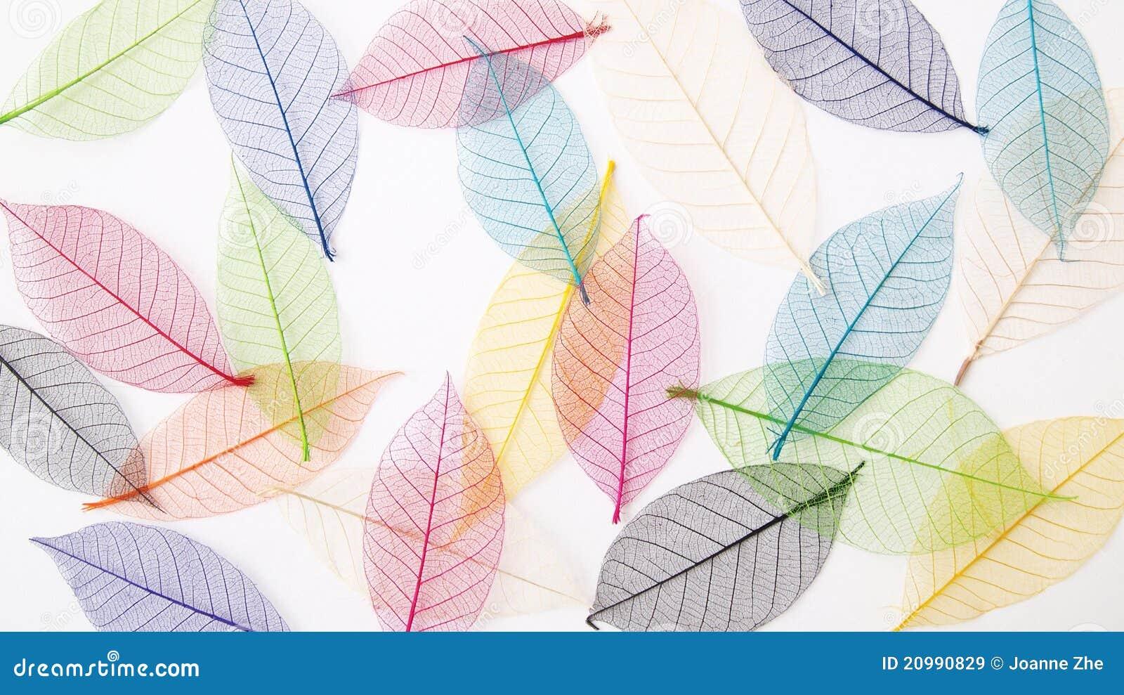 Bakgrund colors leavespastell nätt