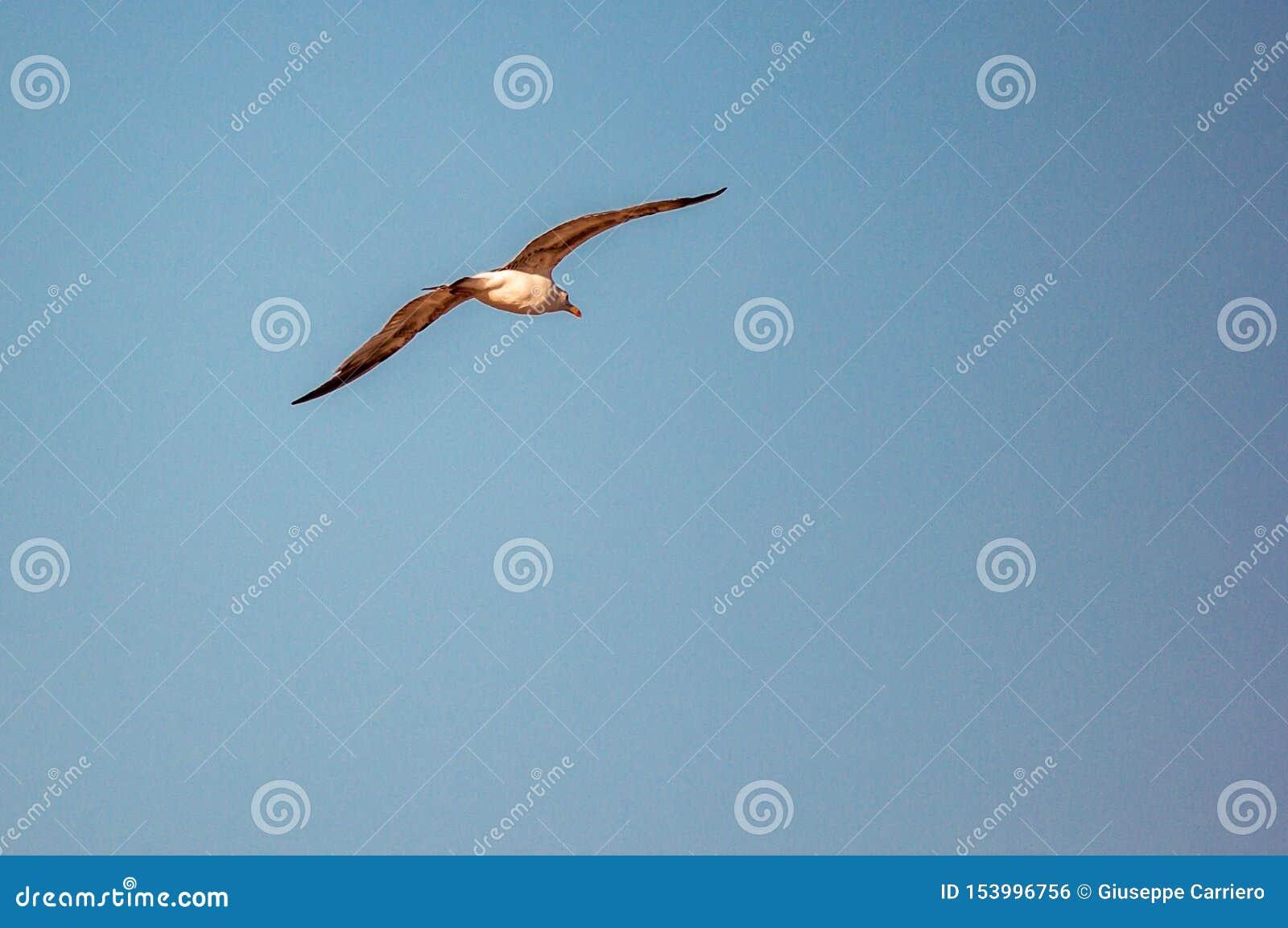 Bakgrund en härlig blå sommarhimmel utan ett moln, att skissera en flygaseagull som slås av solen