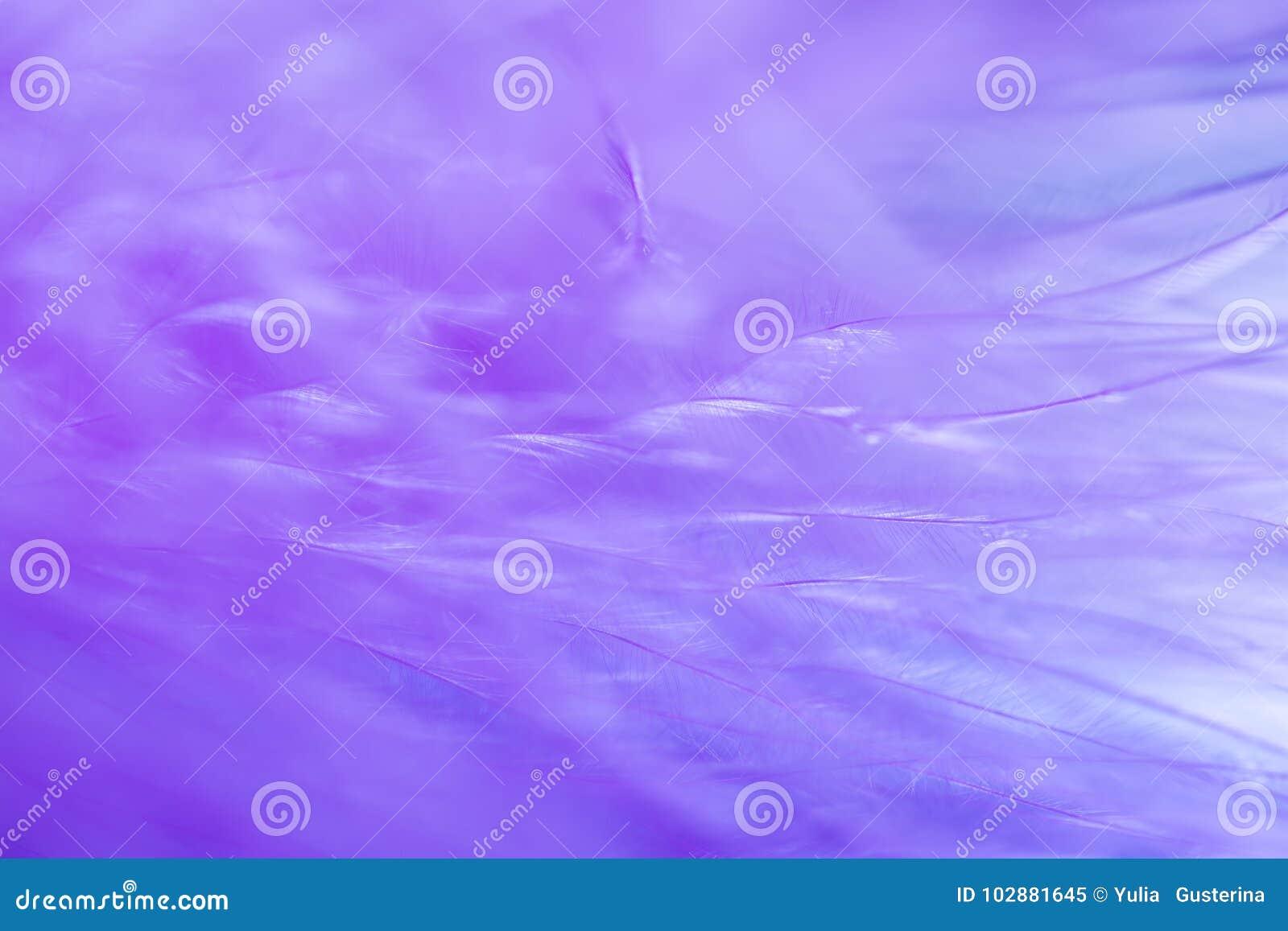 Bakgrund för abstrakt begrepp för textur för fjäder för lilafärgtrender