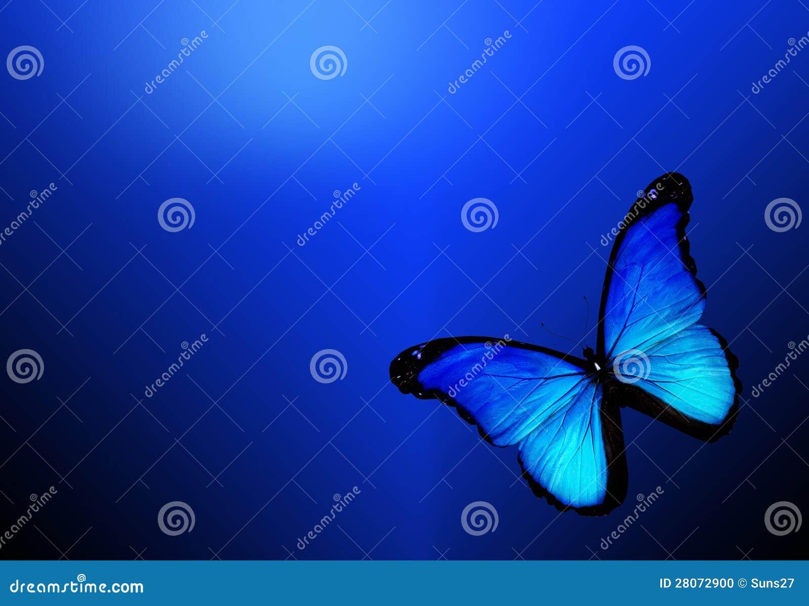 Bakgrund för blåttfjärilsonblue
