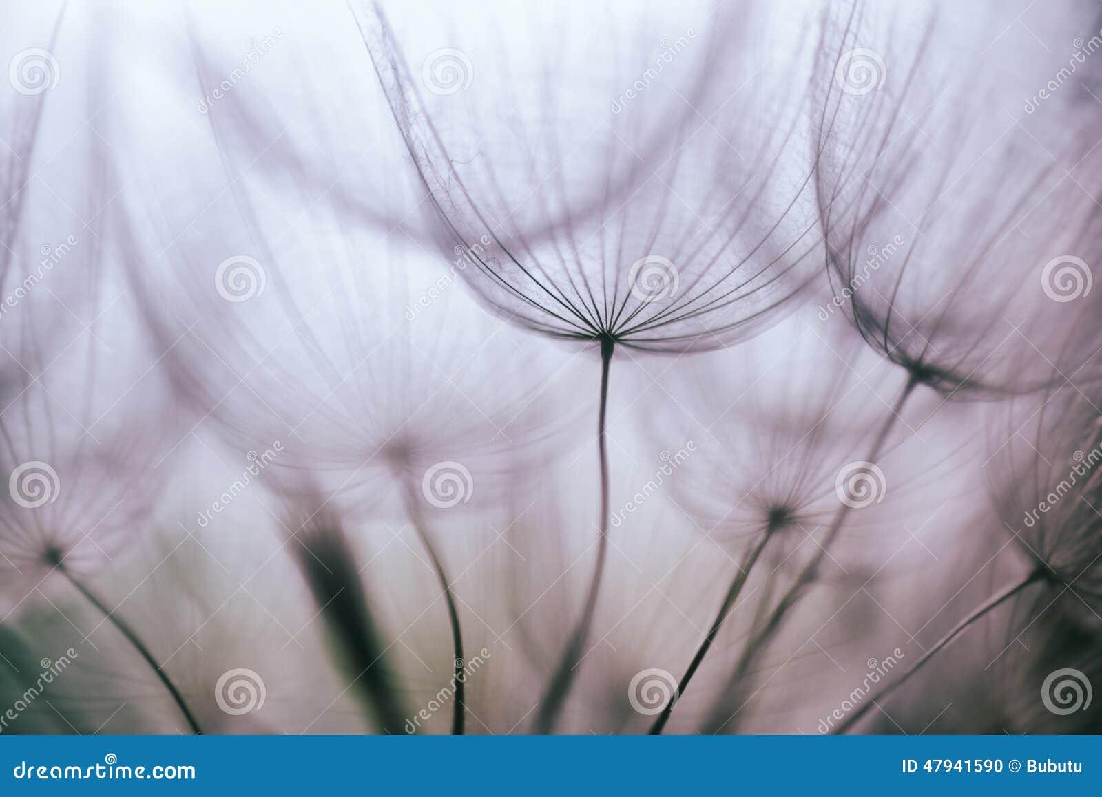 Bakgrund för blomma för maskros för tappninglilaabstrakt begrepp