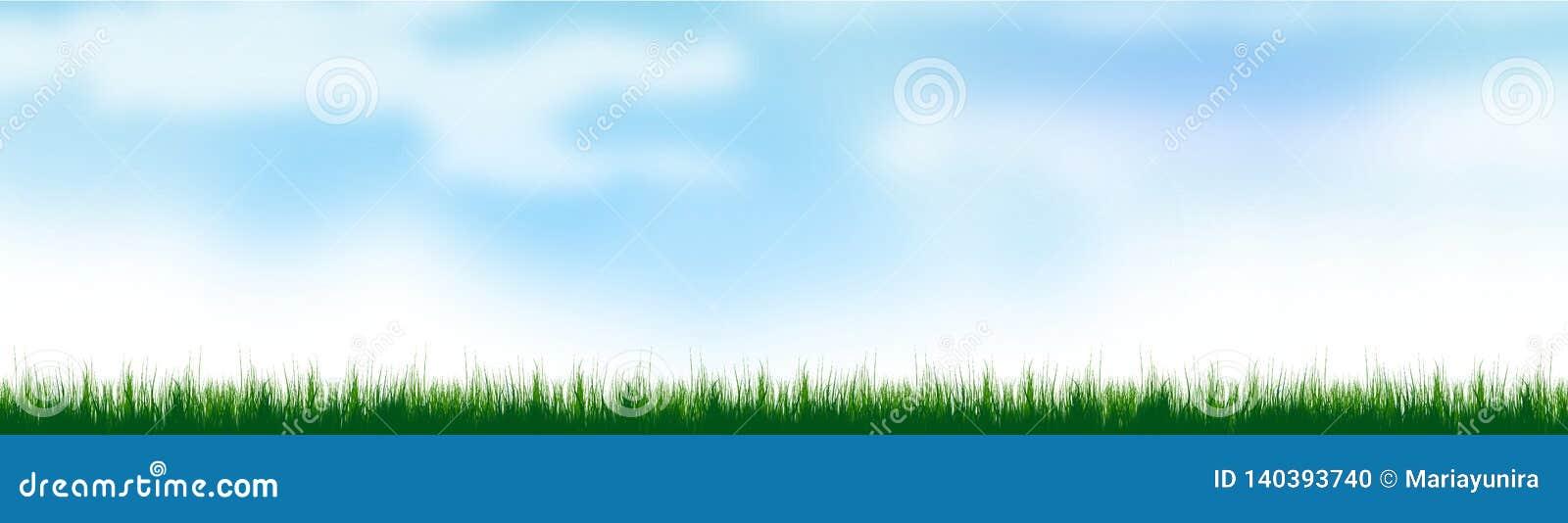 Bakgrund för grönt gräs på sommartid