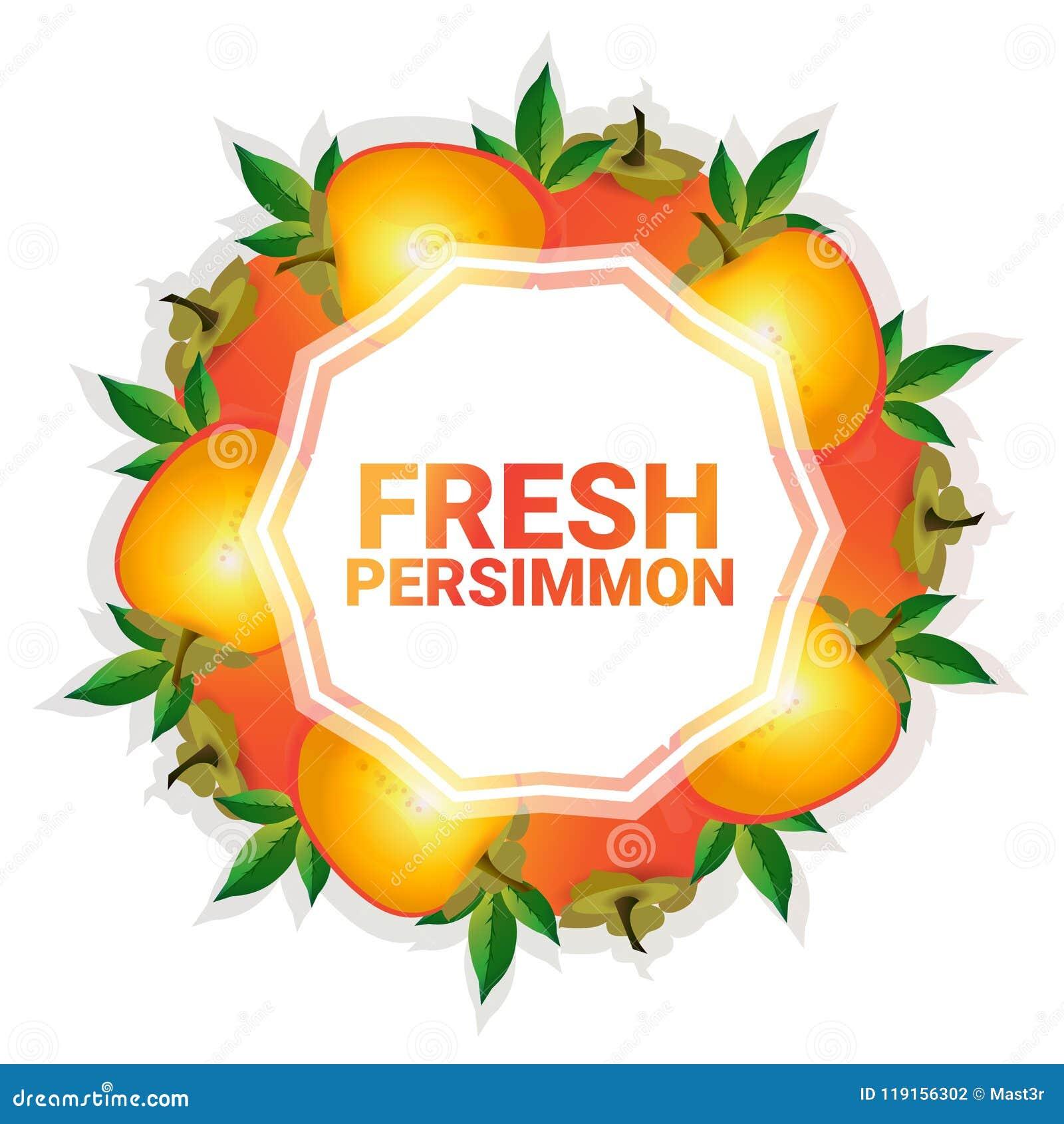 Bakgrund för modell för färgrikt för cirkel för persimonfrukt utrymme för kopia organisk over vit