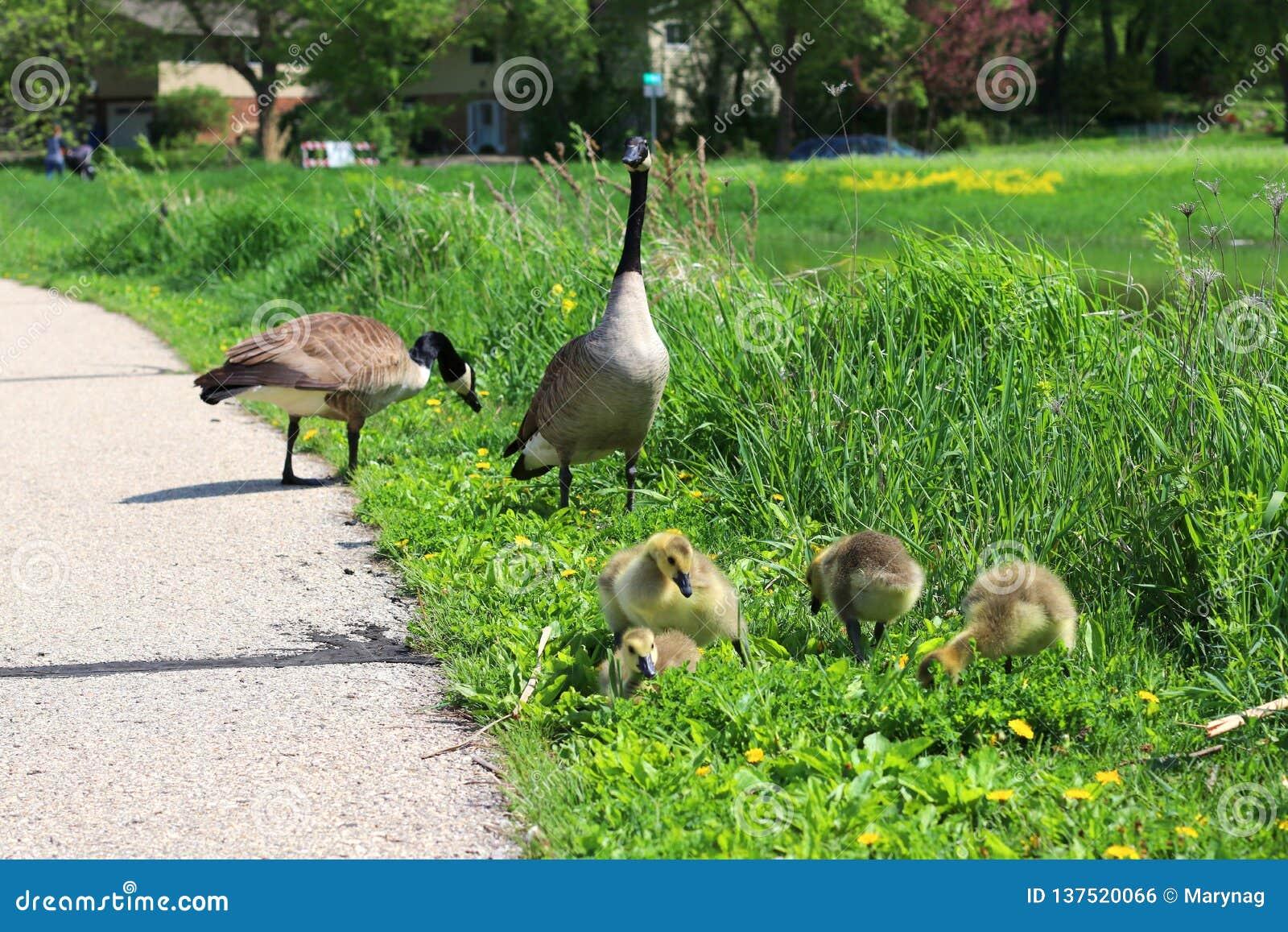 Bakgrund för natur för Midwest vårdjurliv