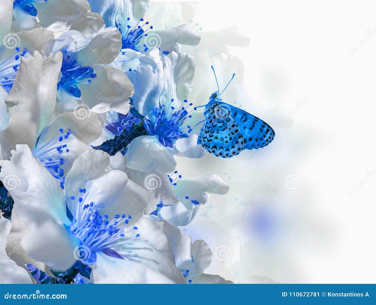 Bakgrund för vår för makro för blommor för fjäril för mandelträd