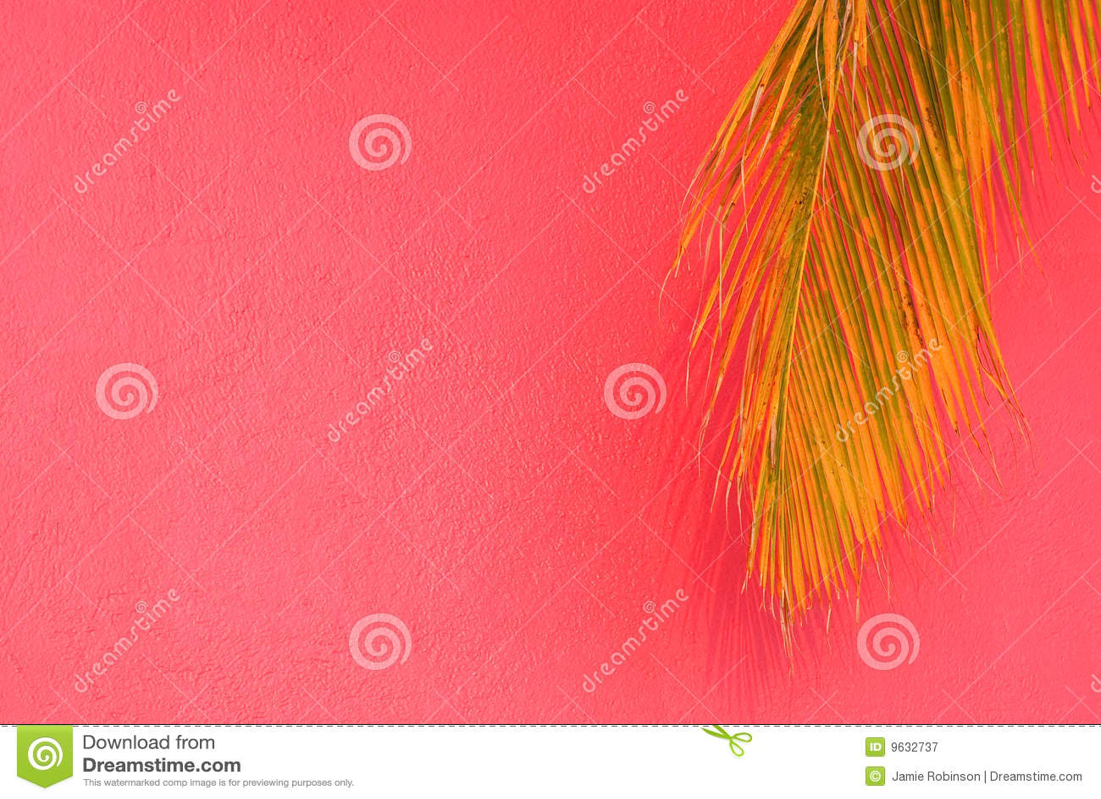 Bakgrund gömma i handflatan den tropiska rosa treen