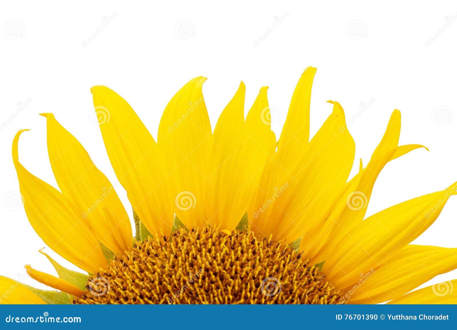 Bakgrund isolerad solroswhite