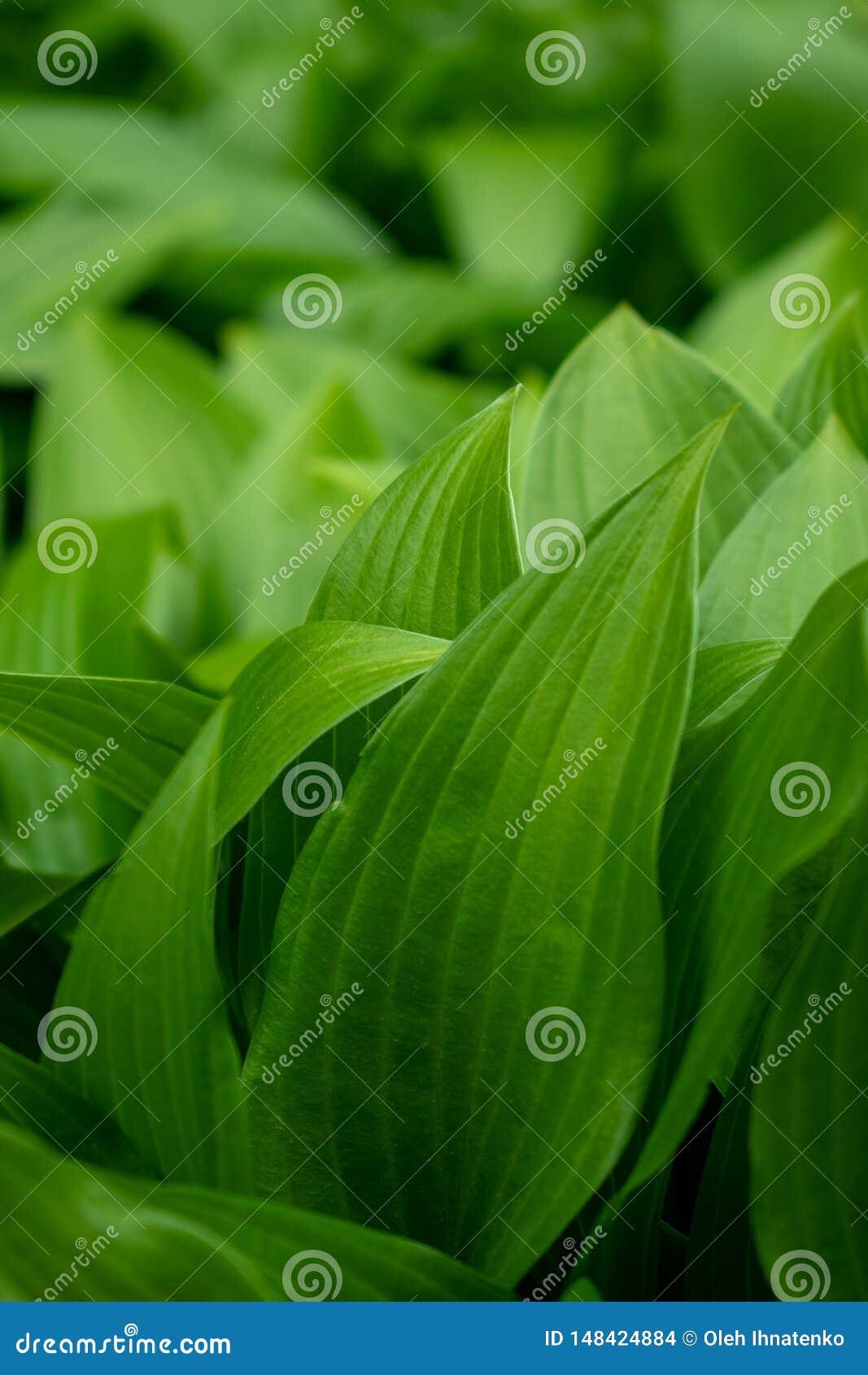 Bakgrund med gröna sidor och bokeh