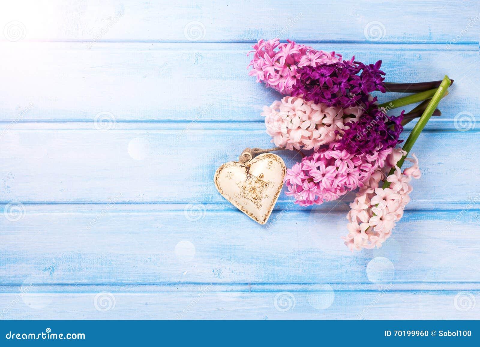 Bakgrund med ny violetta hyacinter för rosa färger och hjärta på blått
