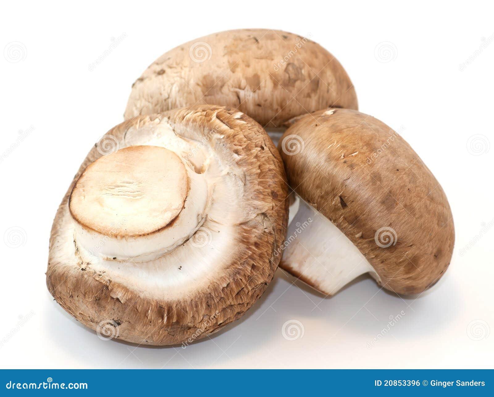 Bakgrund plocka svamp vitt helt för porcini