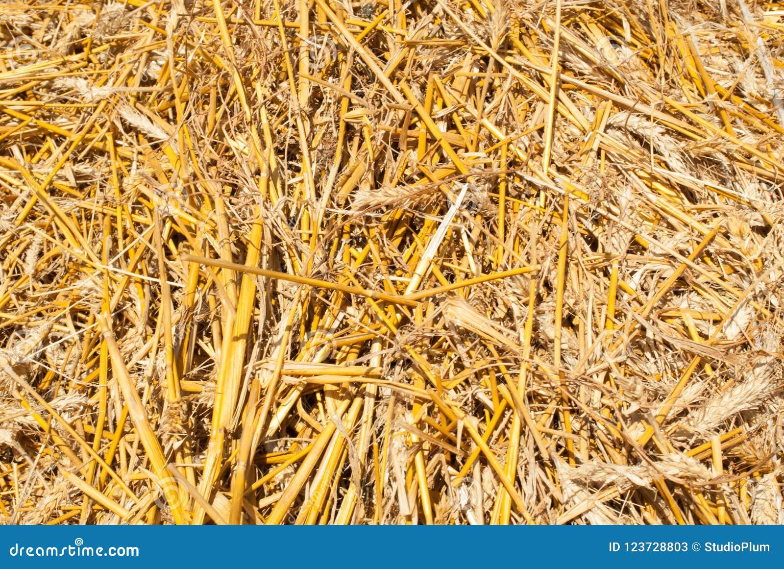 Bakgrunden av gult sugrör är ideal för inskrifttexturbakgrund