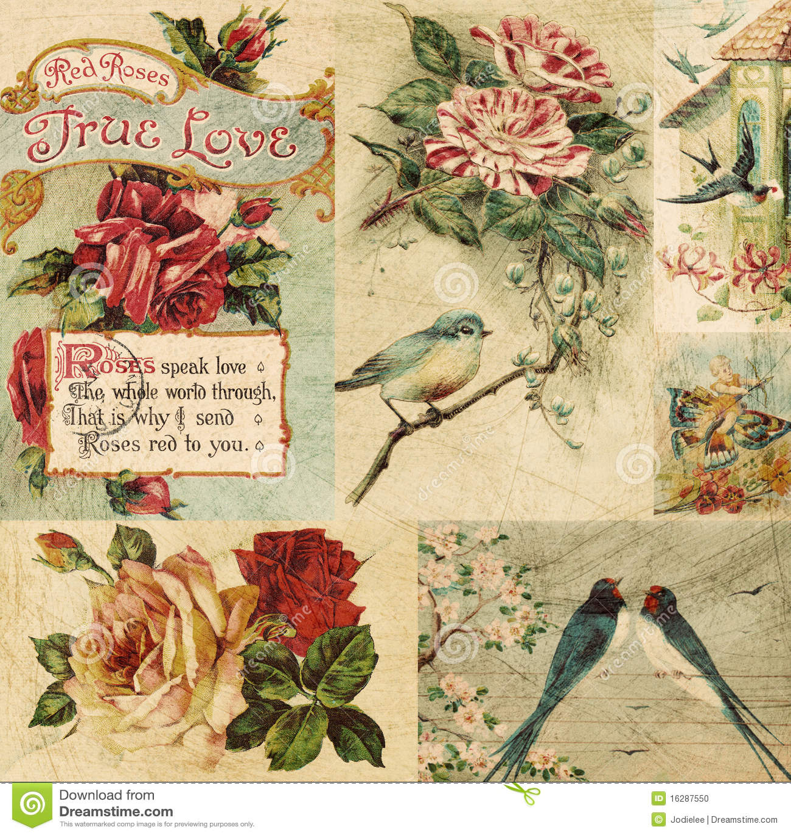 Bakgrundsfågelcollage blommar tappning