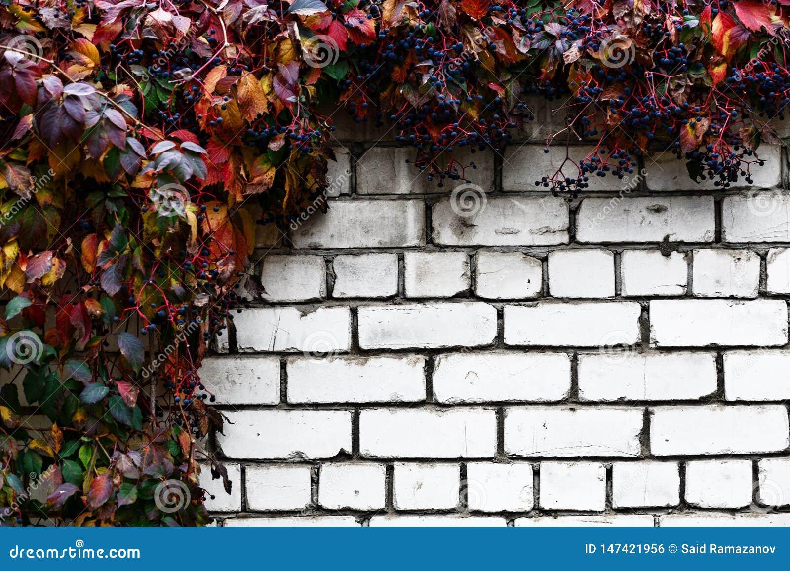 Bakstenen muur met decoratieve druiven abstracte achtergrond