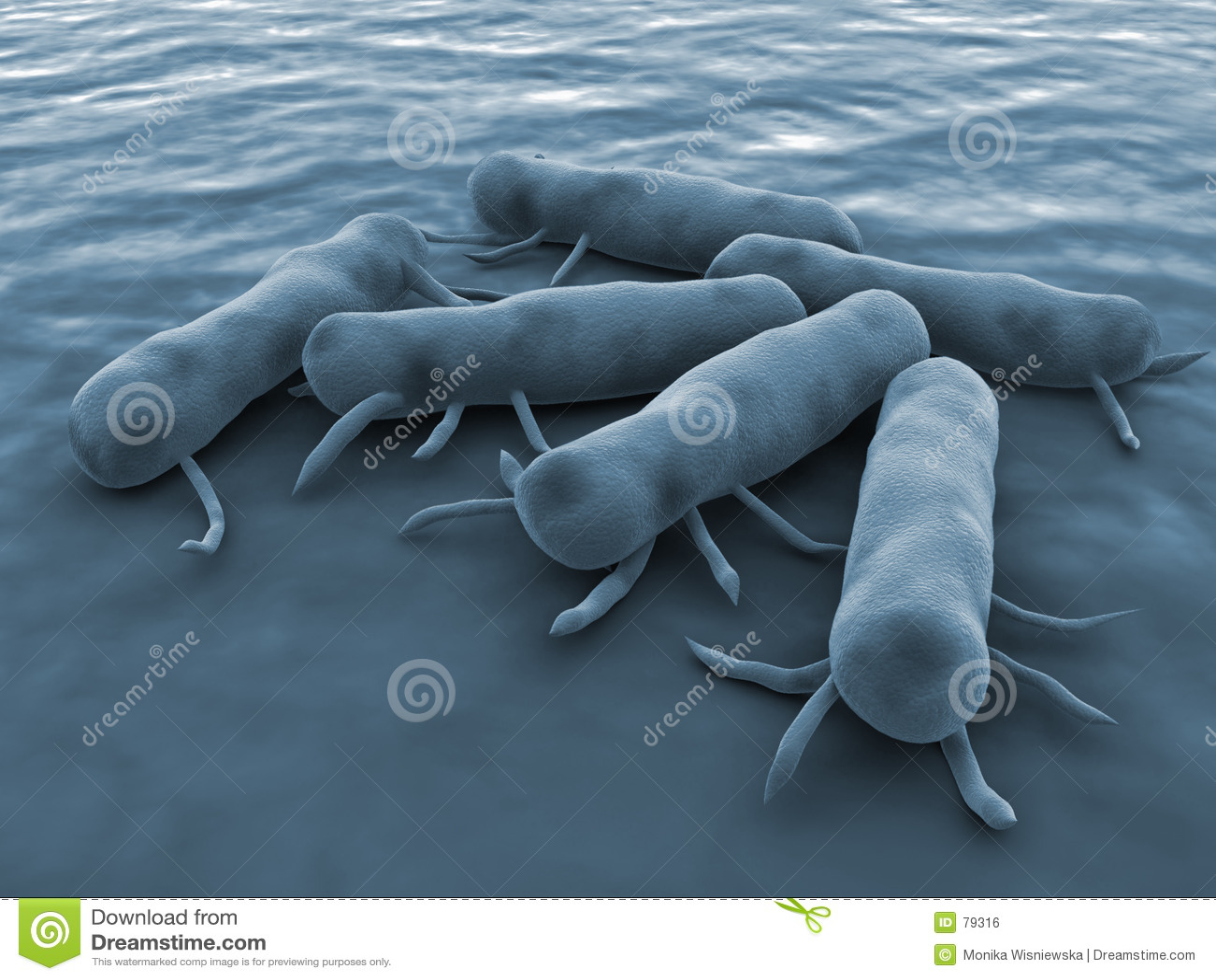 Bakterii salmonella