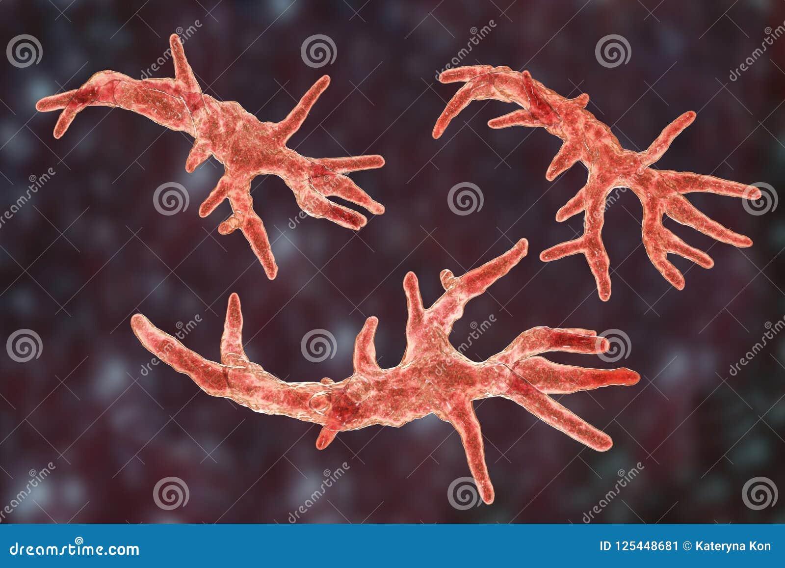 balamuthia mandrillaris amoeba stock illustration illustration of
