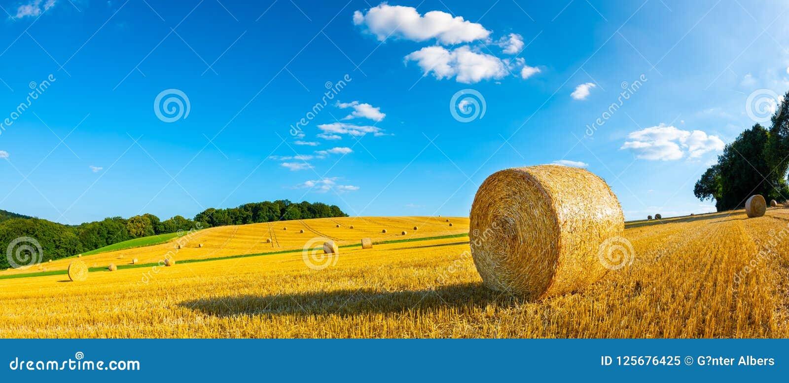 Balas de feno em um campo