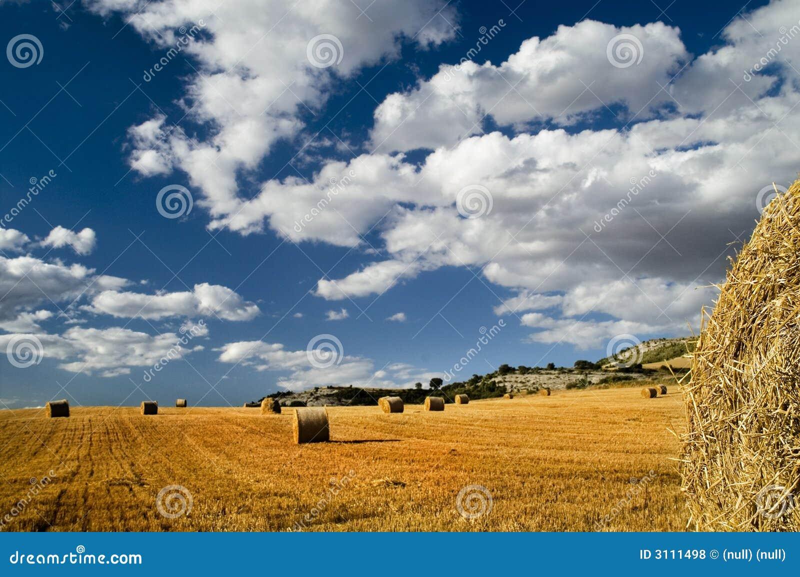 Balas de heno en un campo