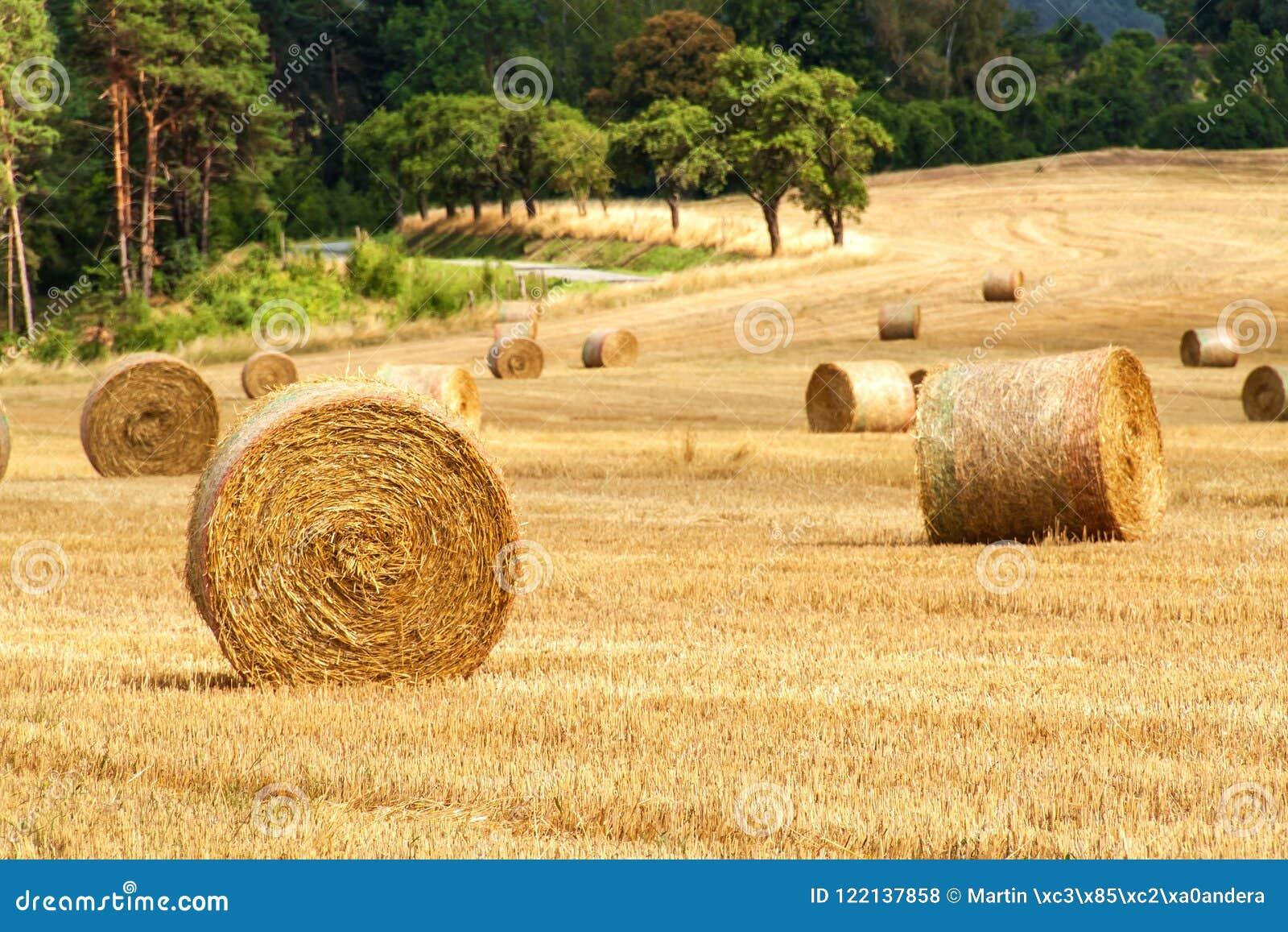 Balas de la paja en campo en el día de verano del bosque en la granja en la República Checa Maíz de la cosecha Montañas de Moravi