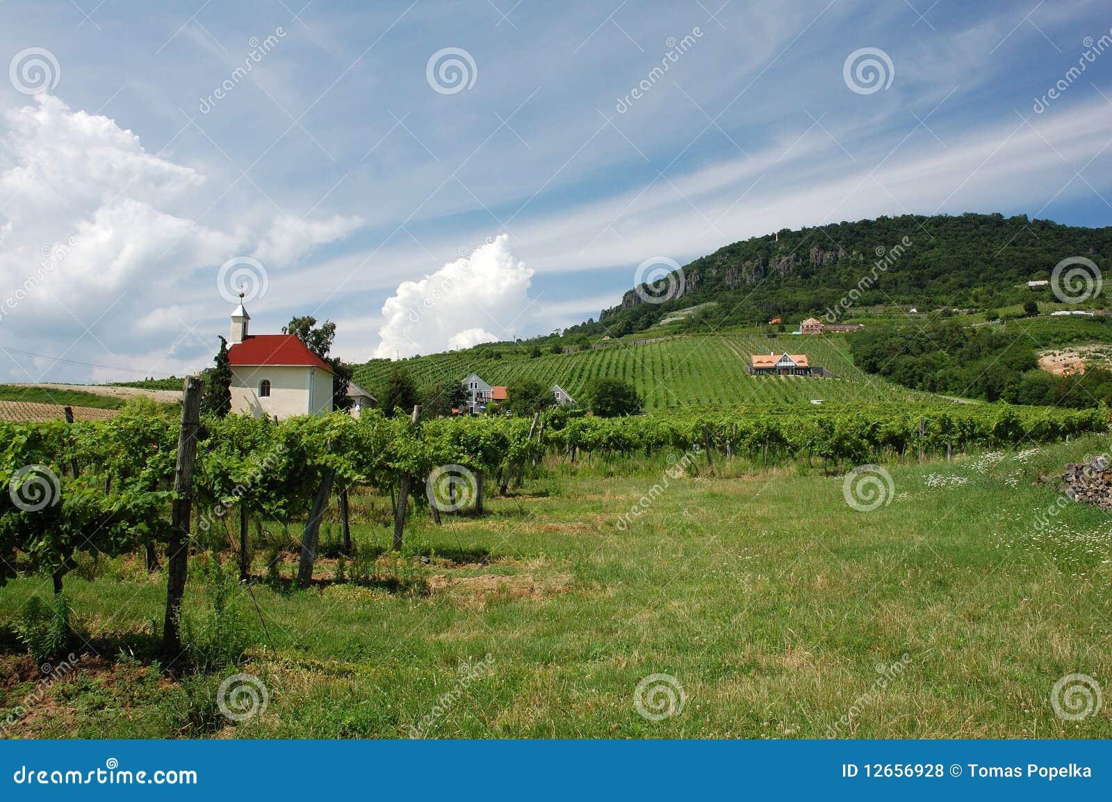 Balaton blisko winnicy