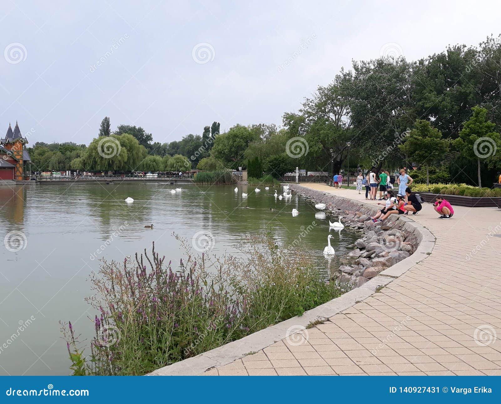 Balaton shore, peoples, water