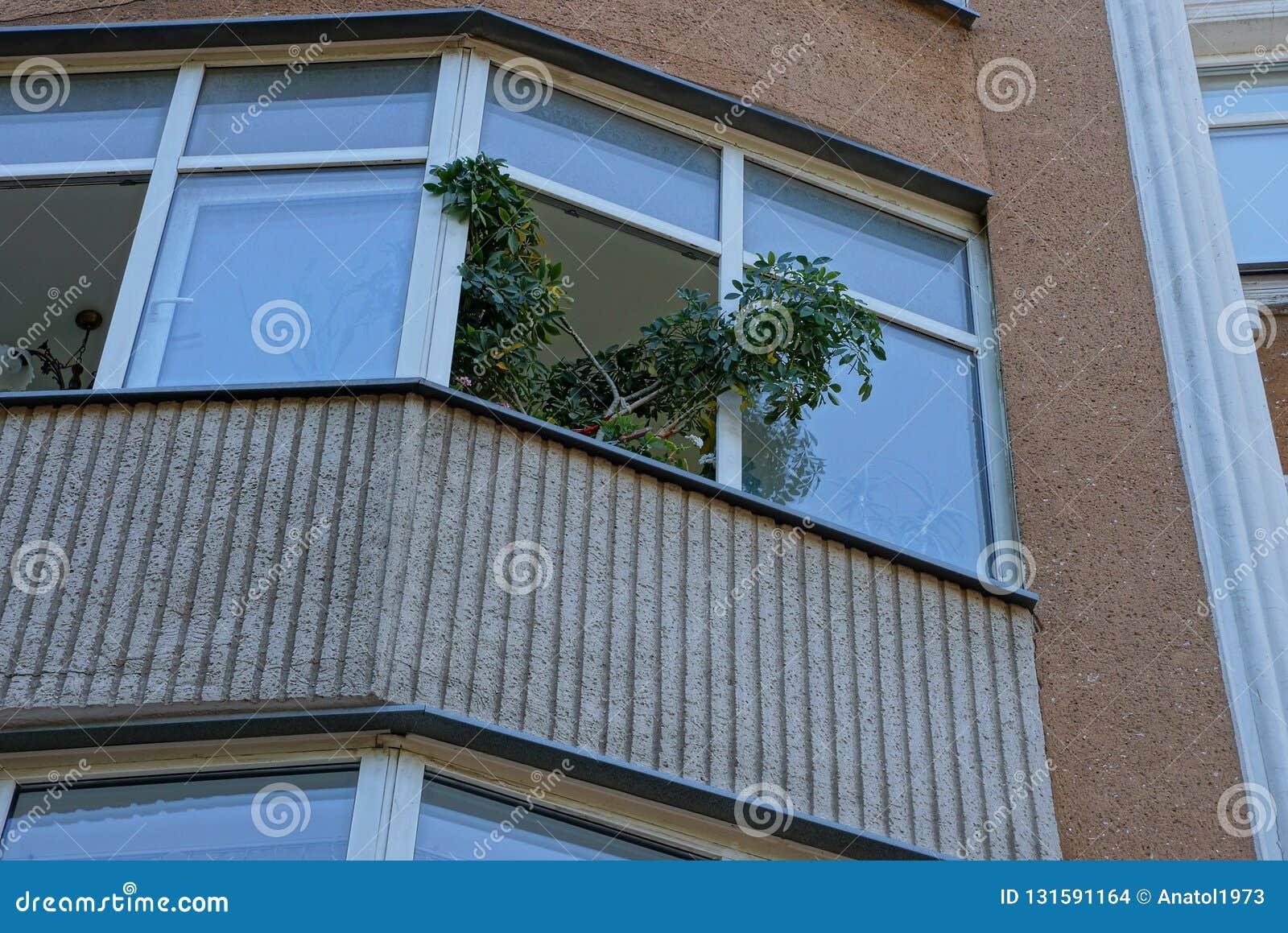 Balcão de Brown com um ramo de uma planta verde decorativa em uma janela aberta