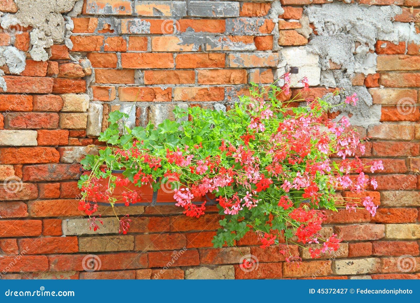 Balcons fleuris avec des pots de géraniums dans la maison rurale
