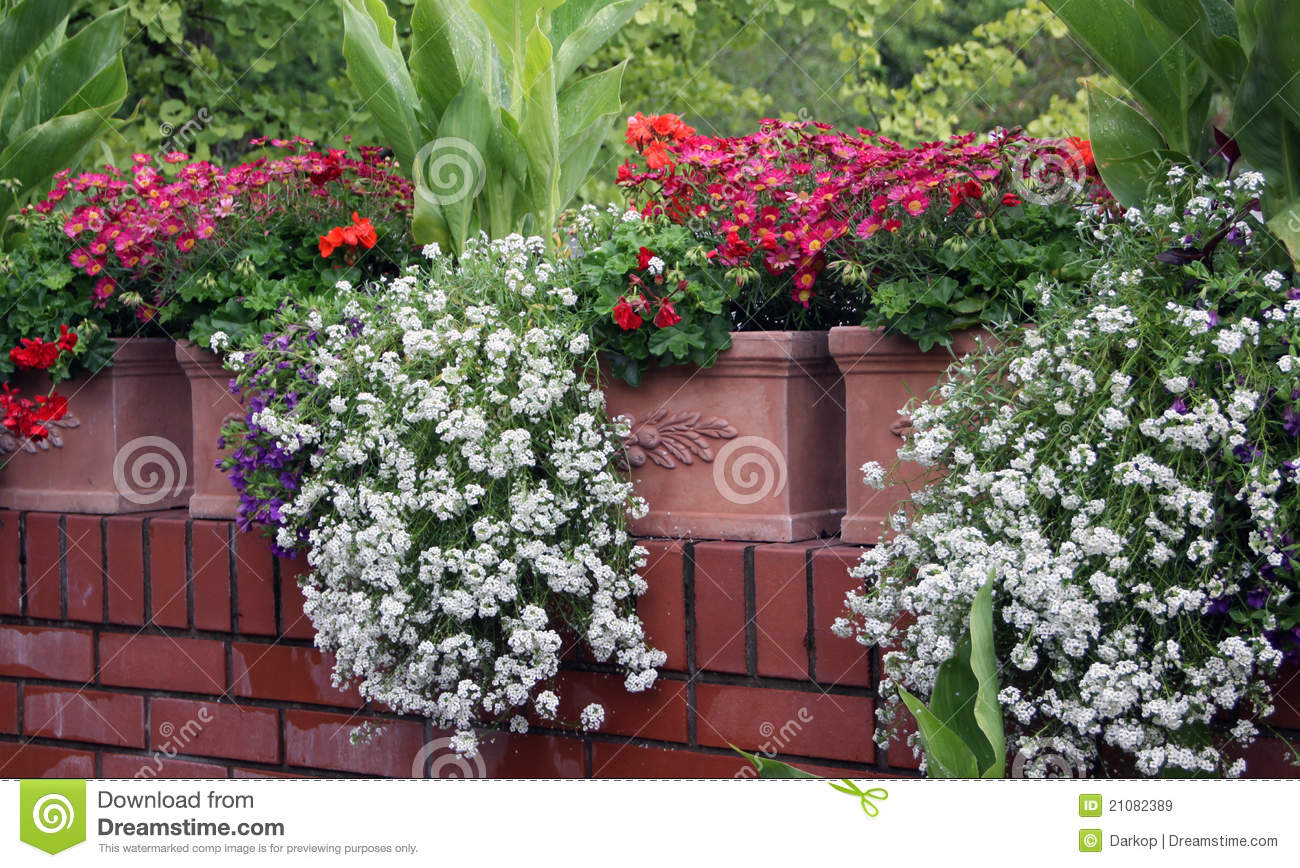 Balcony flowers royalty free stock images image 21082389 for Balcony flowers