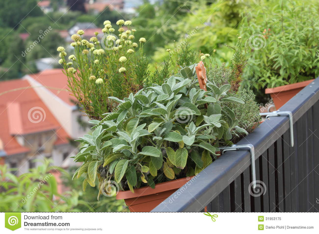 Balcony Herbs Garden In To The Pots Royalty Free Stock