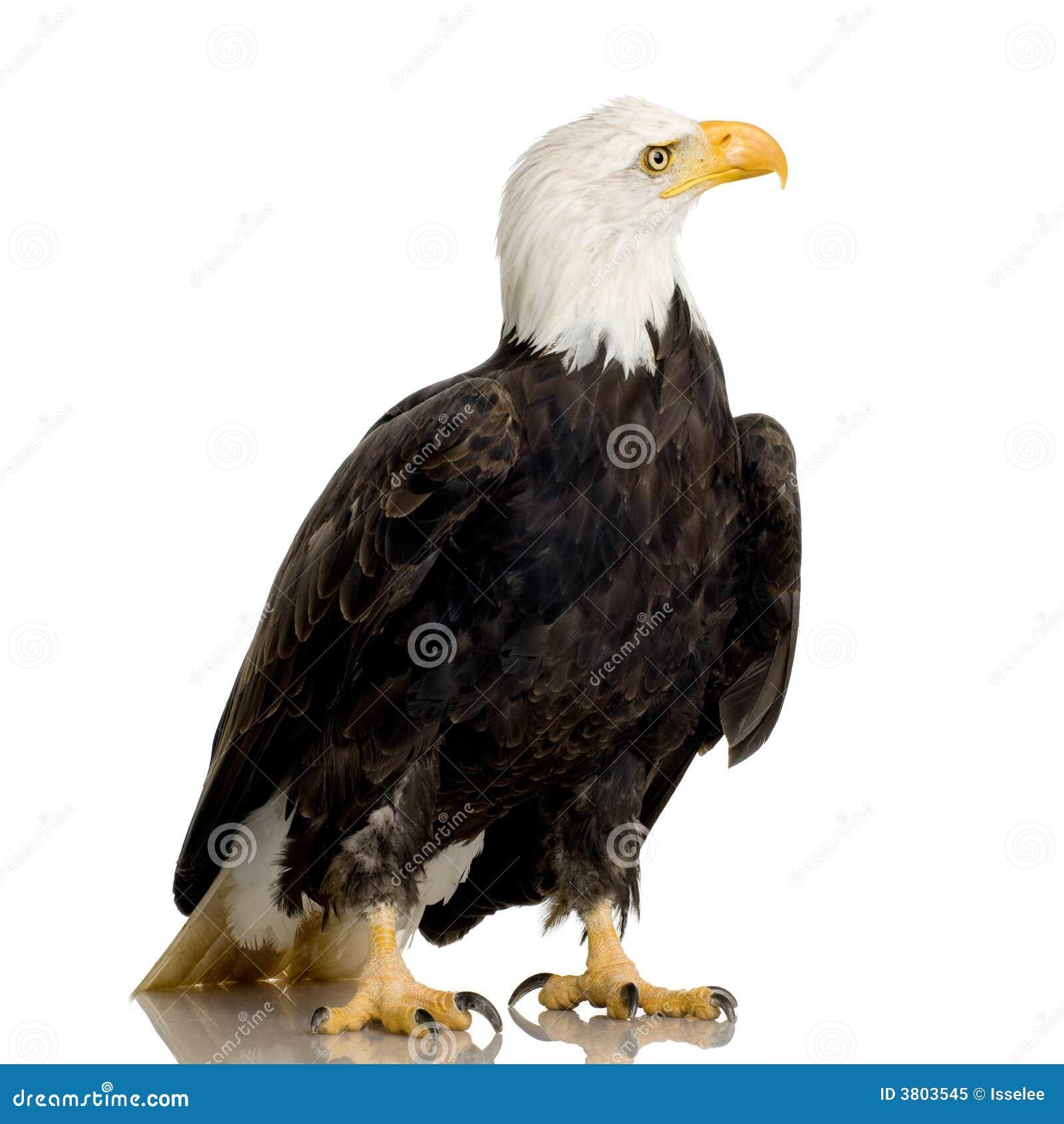 related bald eagle background - photo #43