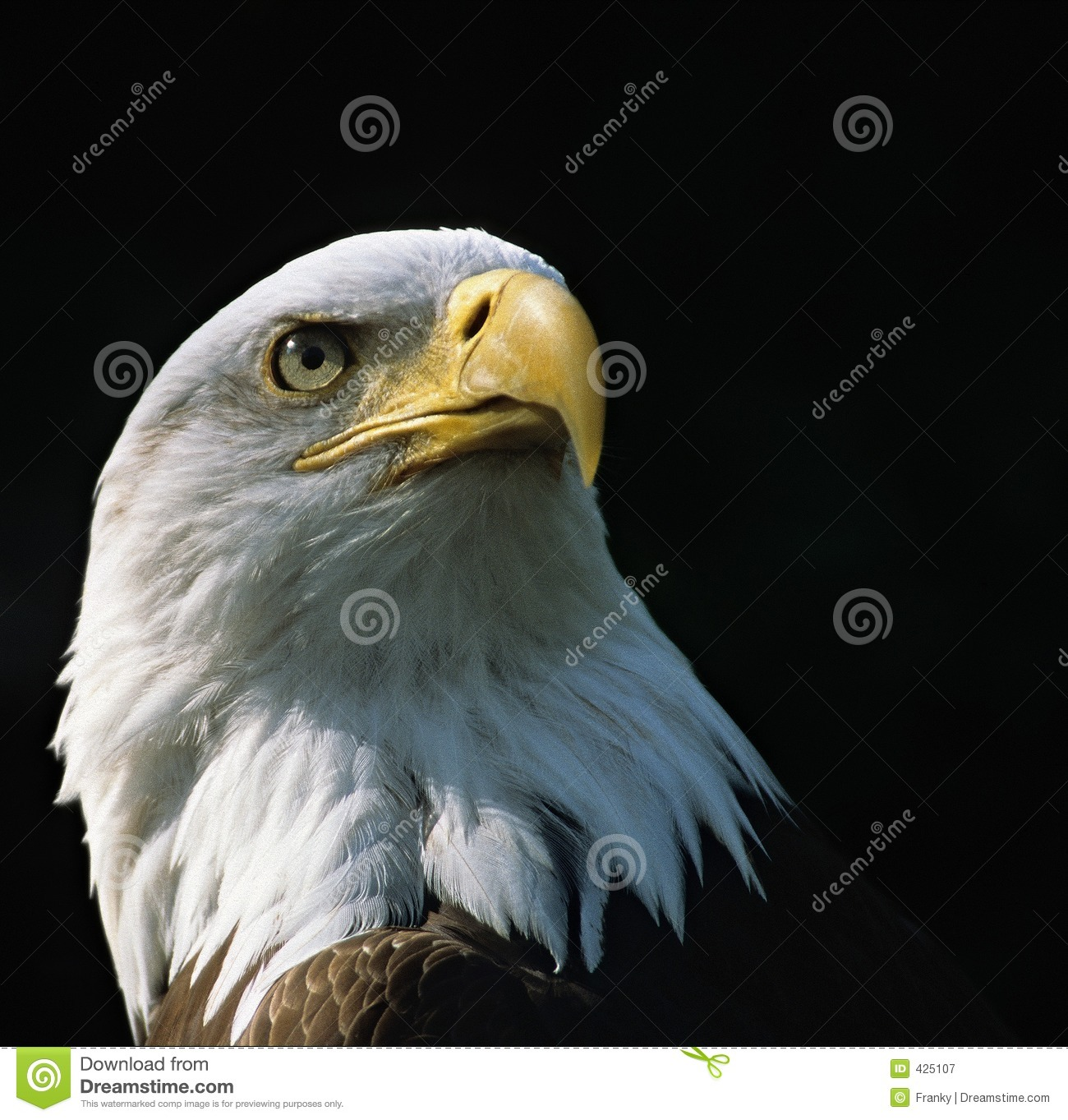 Bald Eagle Royalty Free Stock Photography - Image: 425107