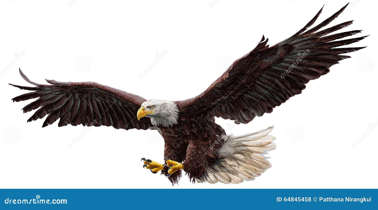 Bald eagle fly color vector.