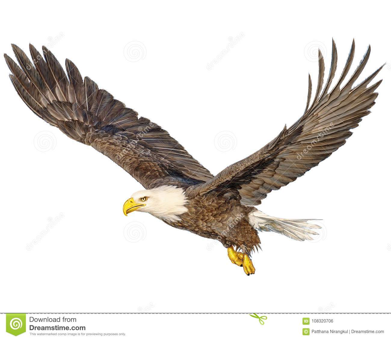 Bald eagle flying hand draw and paint color on white background
