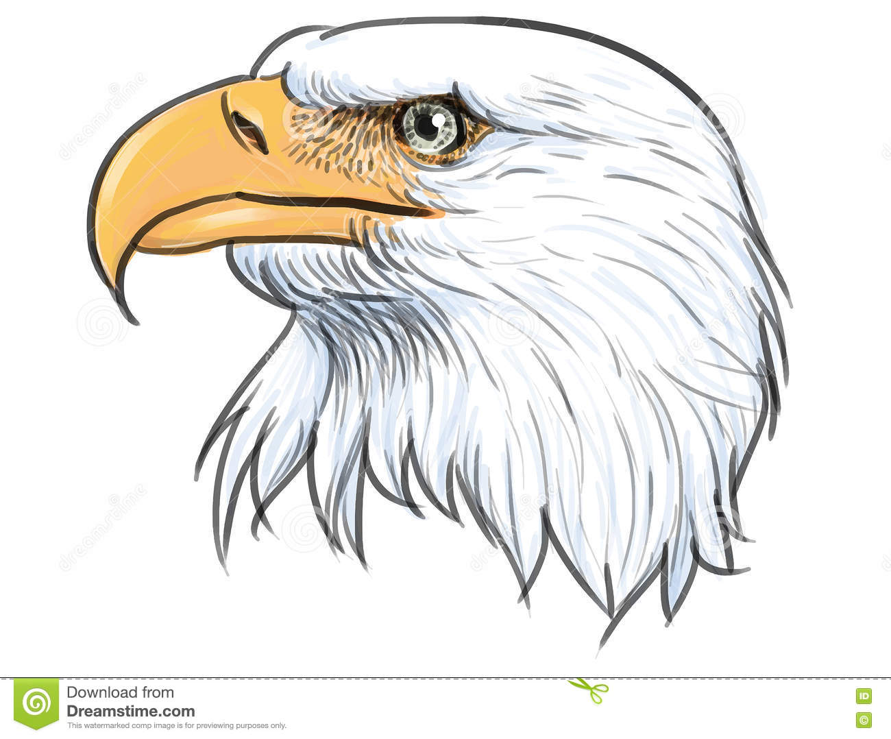 Bald eagle head color vector
