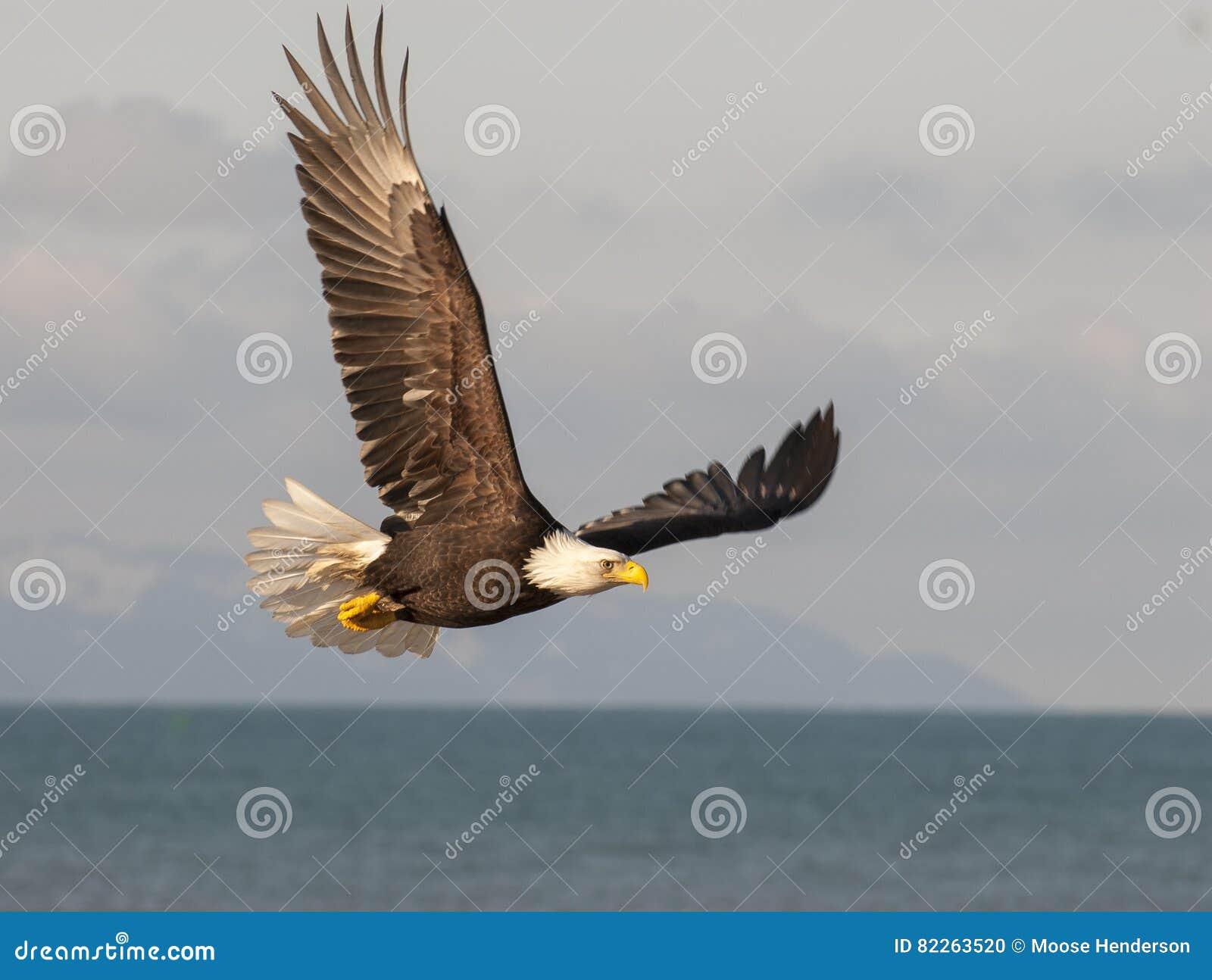 Amazing Eagle From Cadsoft Festooning - Wiring Diagram Ideas ...