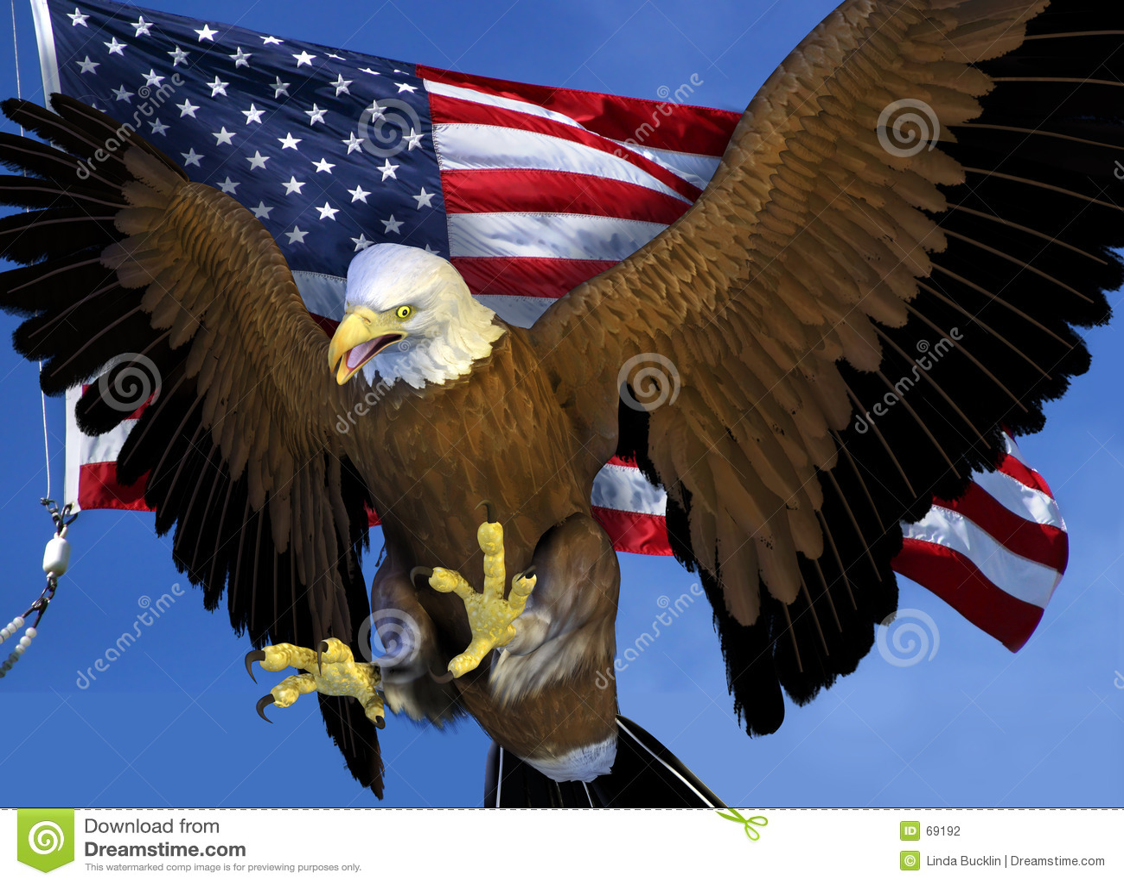 Bald Eagle with US Flag