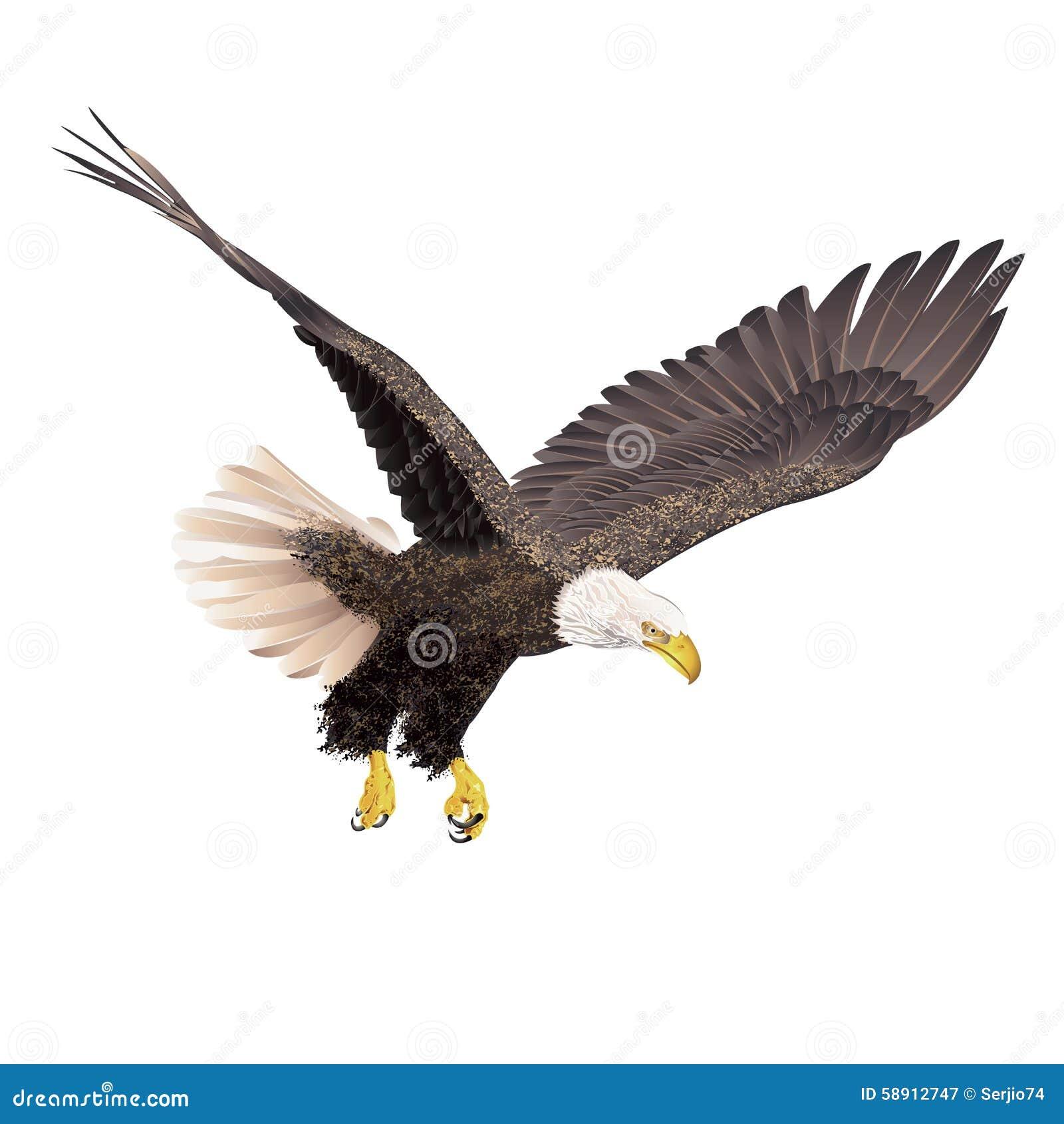 Bald Eagle On White Ba...